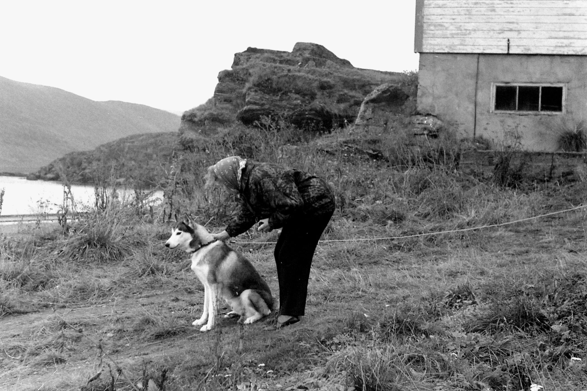 26/9/1988: 26: dog at Havoysund