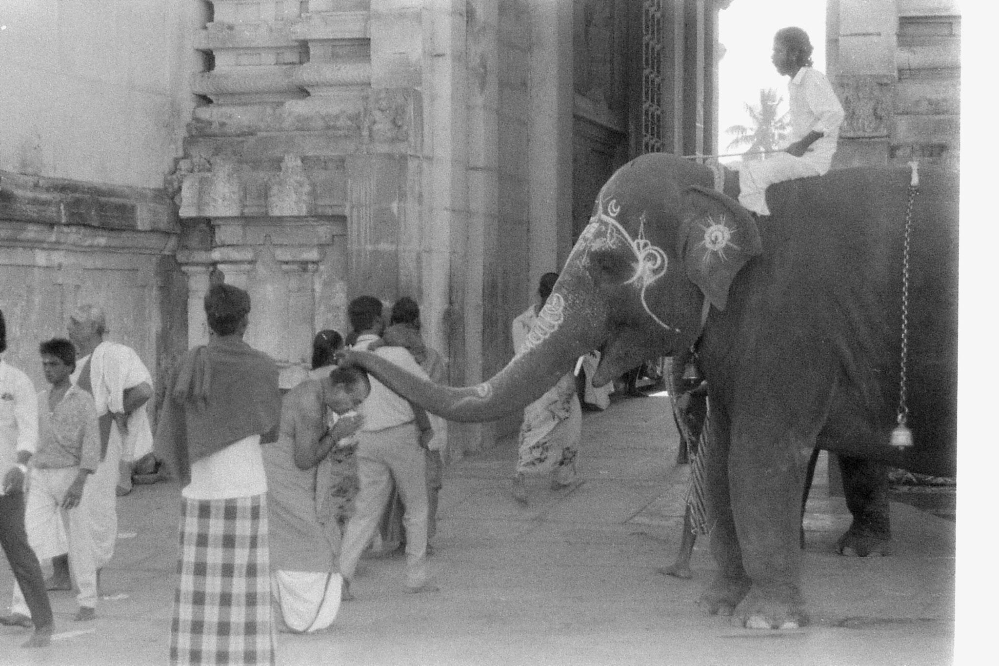 19/1/90: 18: Kanchipuram - Kmakashi temple - elephant blessing pilgrim