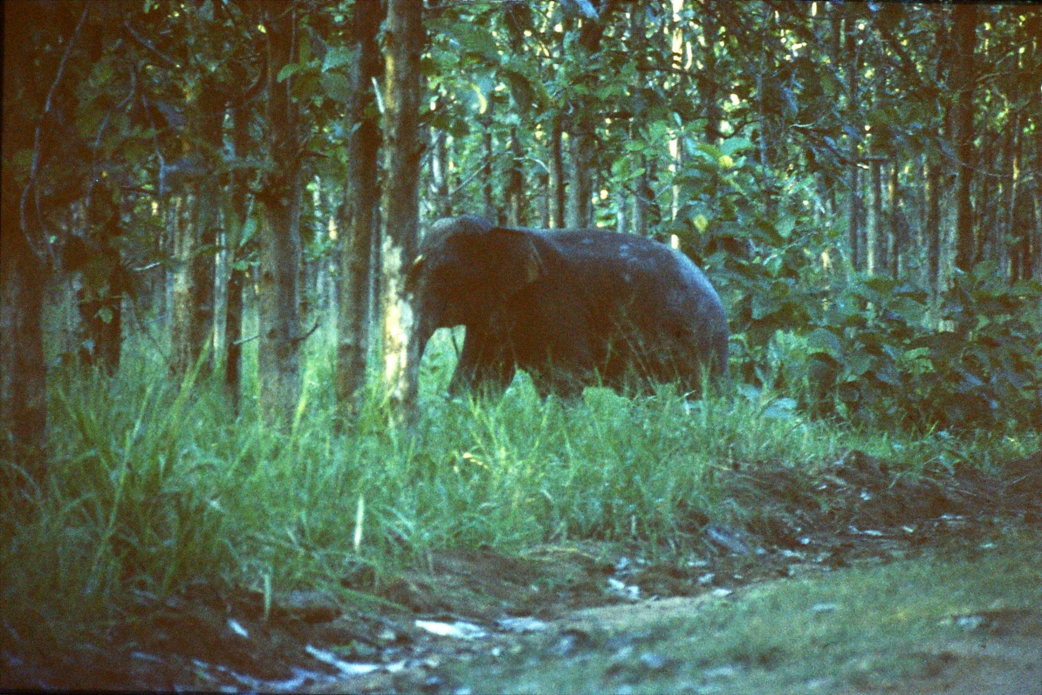 28/1/1990: 2: Uda Walawe Elephant
