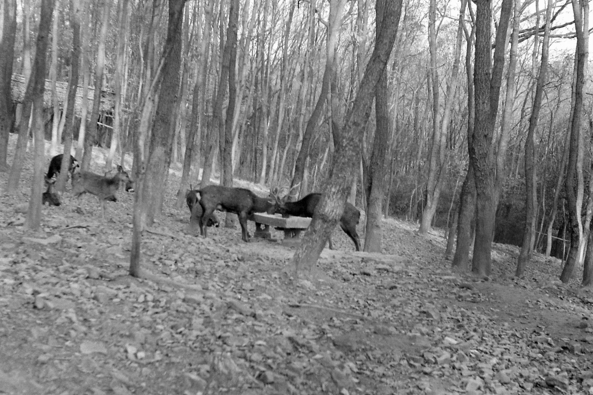 12/12/1988: 25: Nanjing, Linggu Park