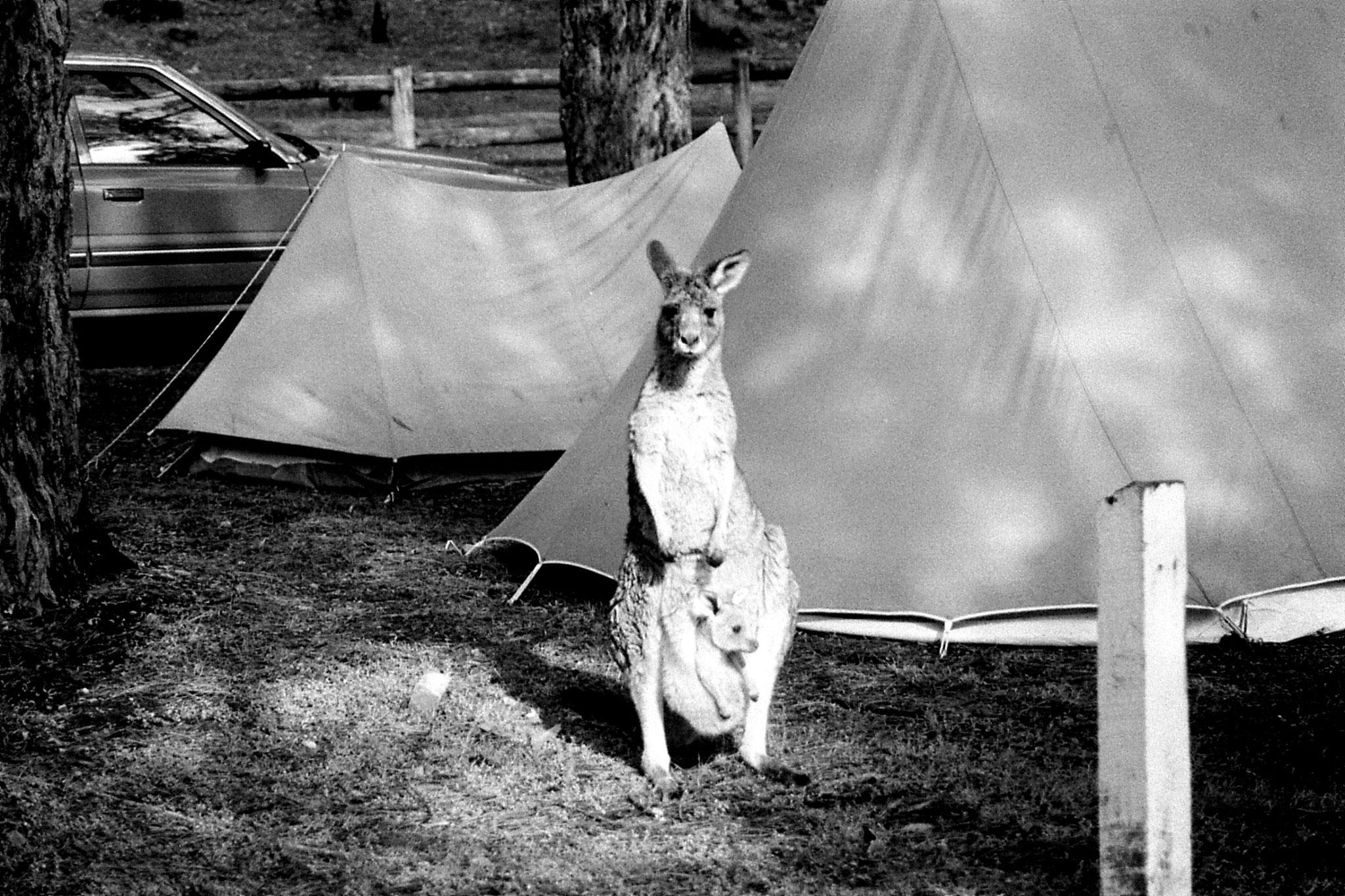 21/9/1990: 26: Grampians Zumsteins campsite
