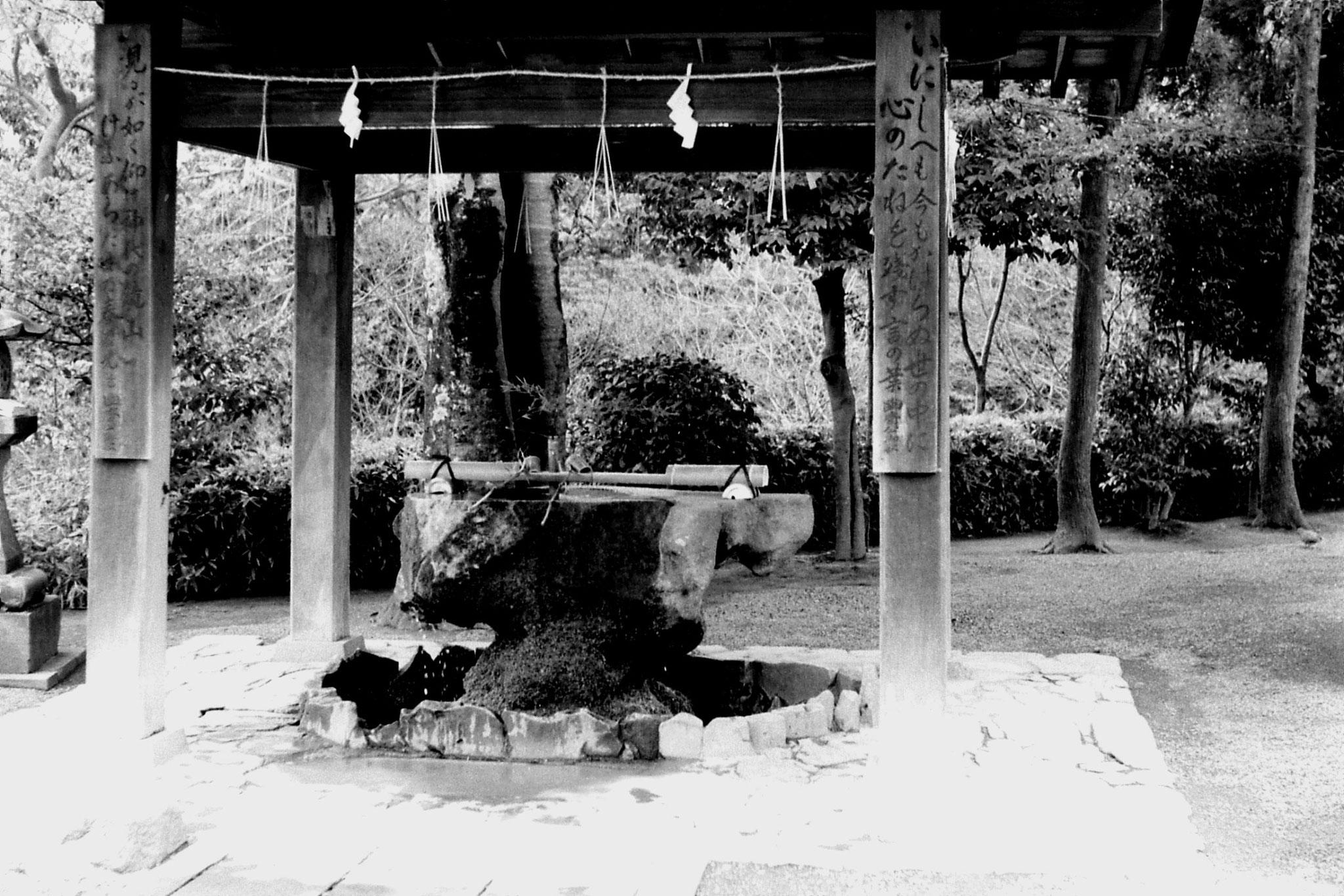 22/1/1989: 19: garden at Kumamoto
