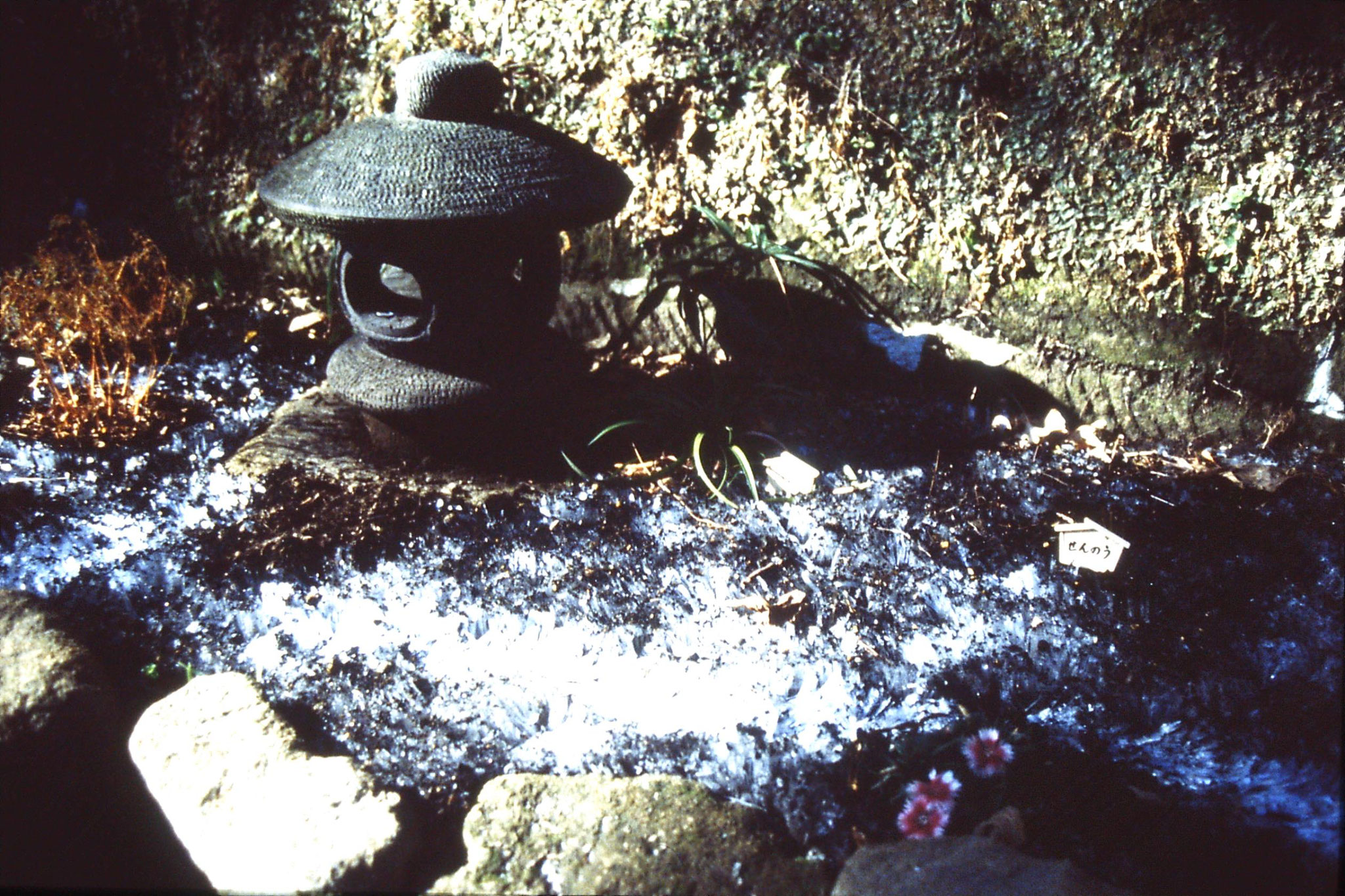 29/1/1989: 34: Frost at Hase Kanon temple