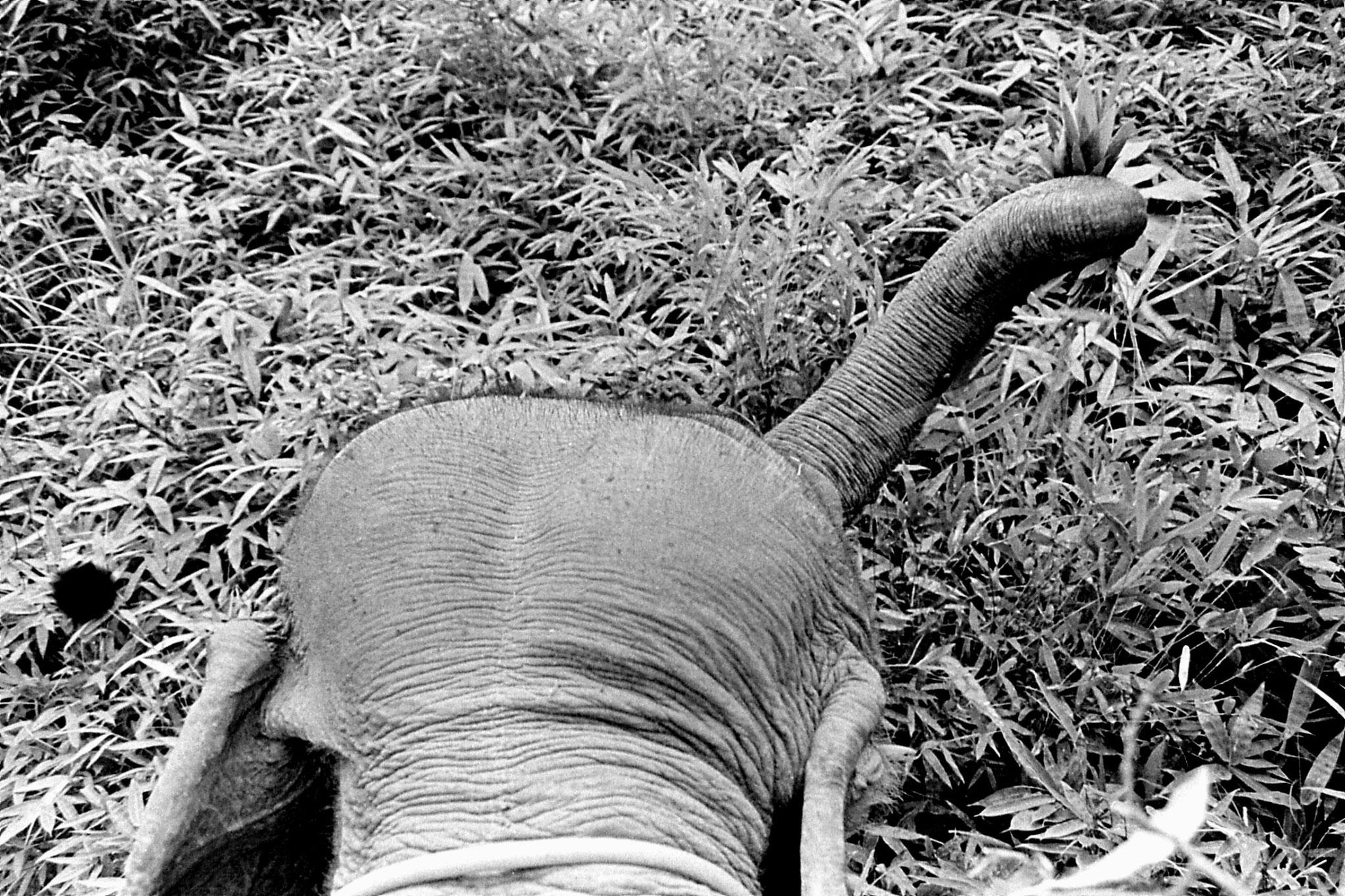 13/6/1990: 28: Last day of Trek, on elephant