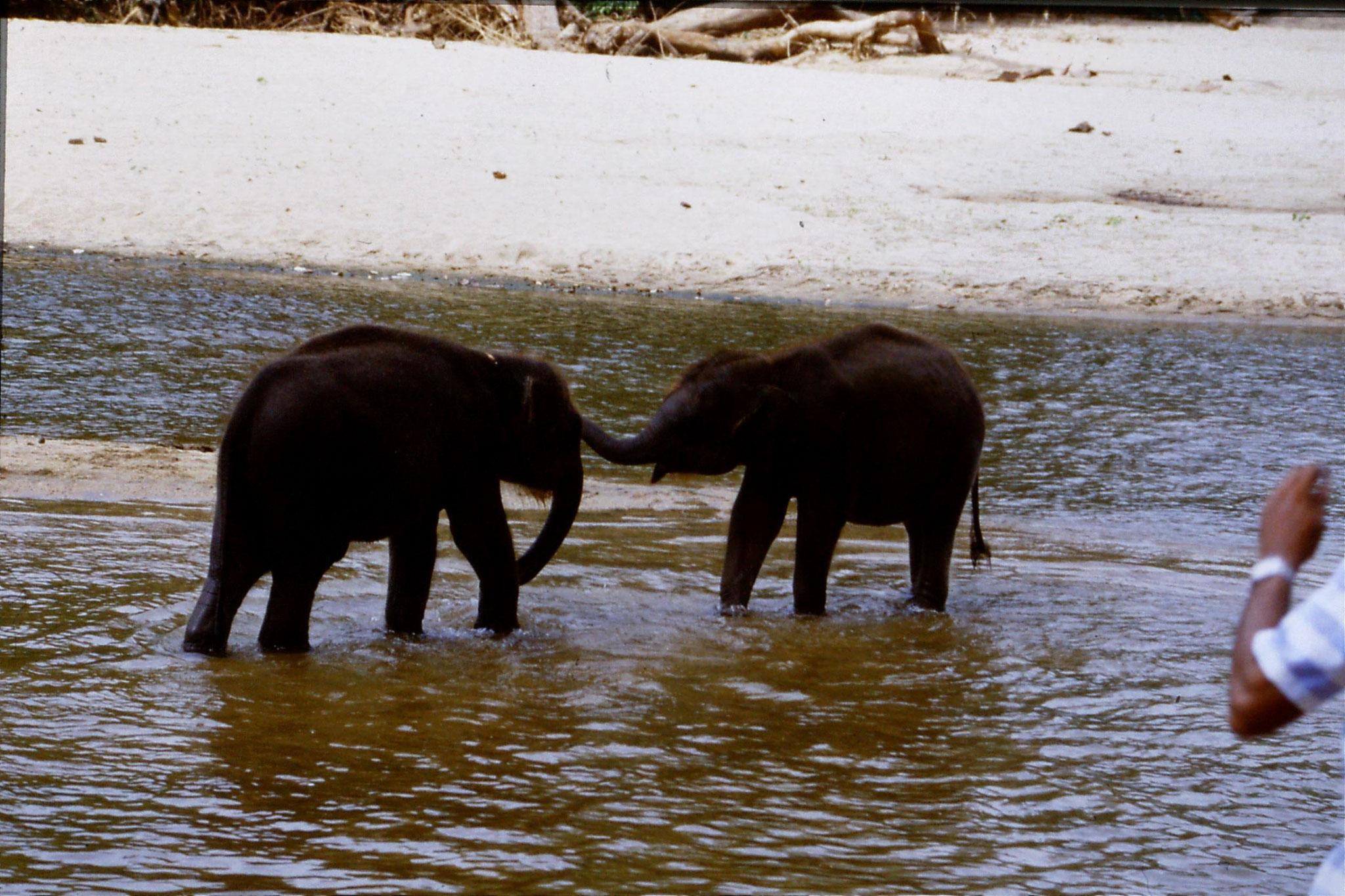 10/2/1990: 14: Kegalla elephant orphanage