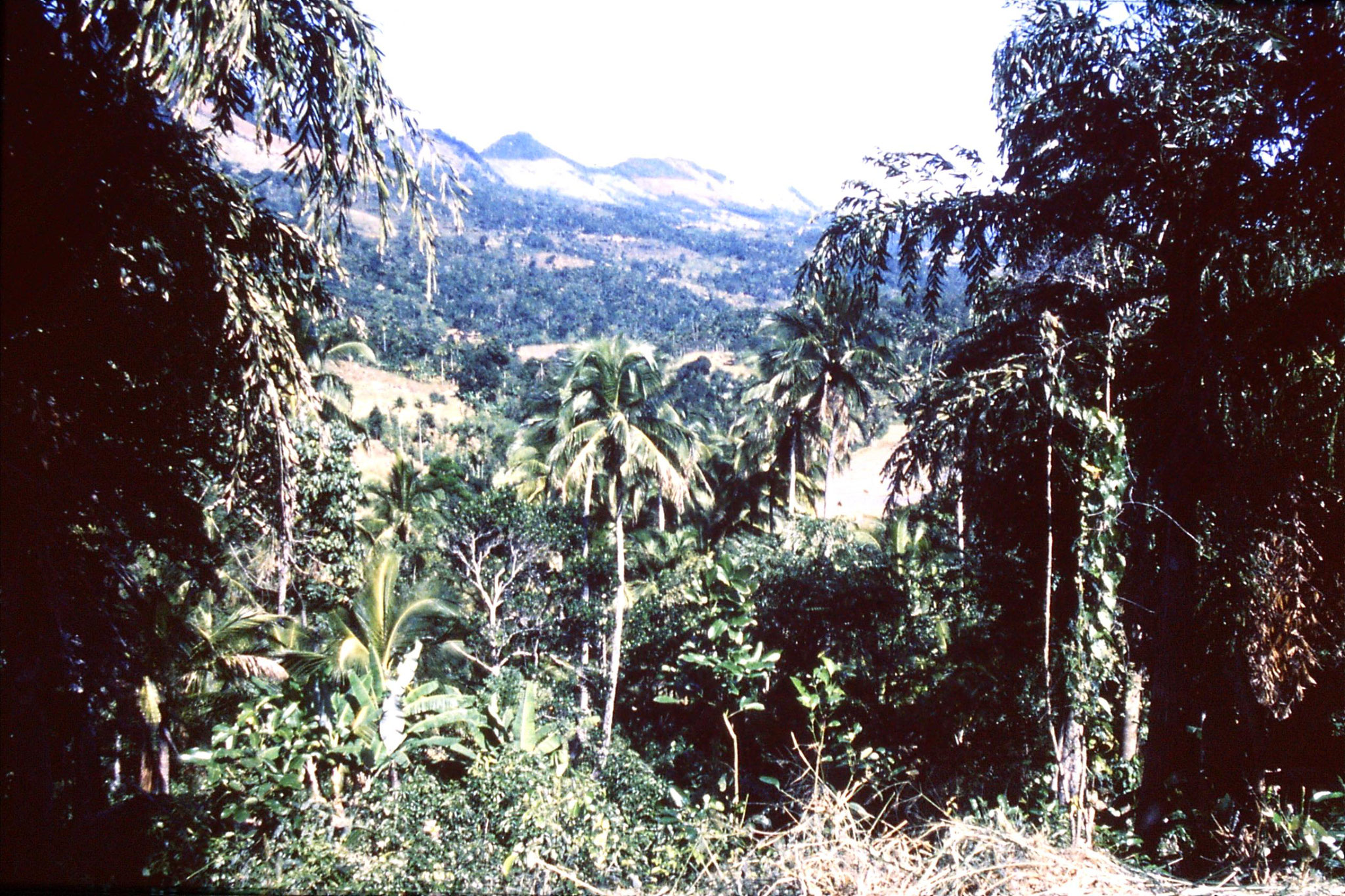 29/1/1990: 5: drive to Sinharaja, near Moragoda