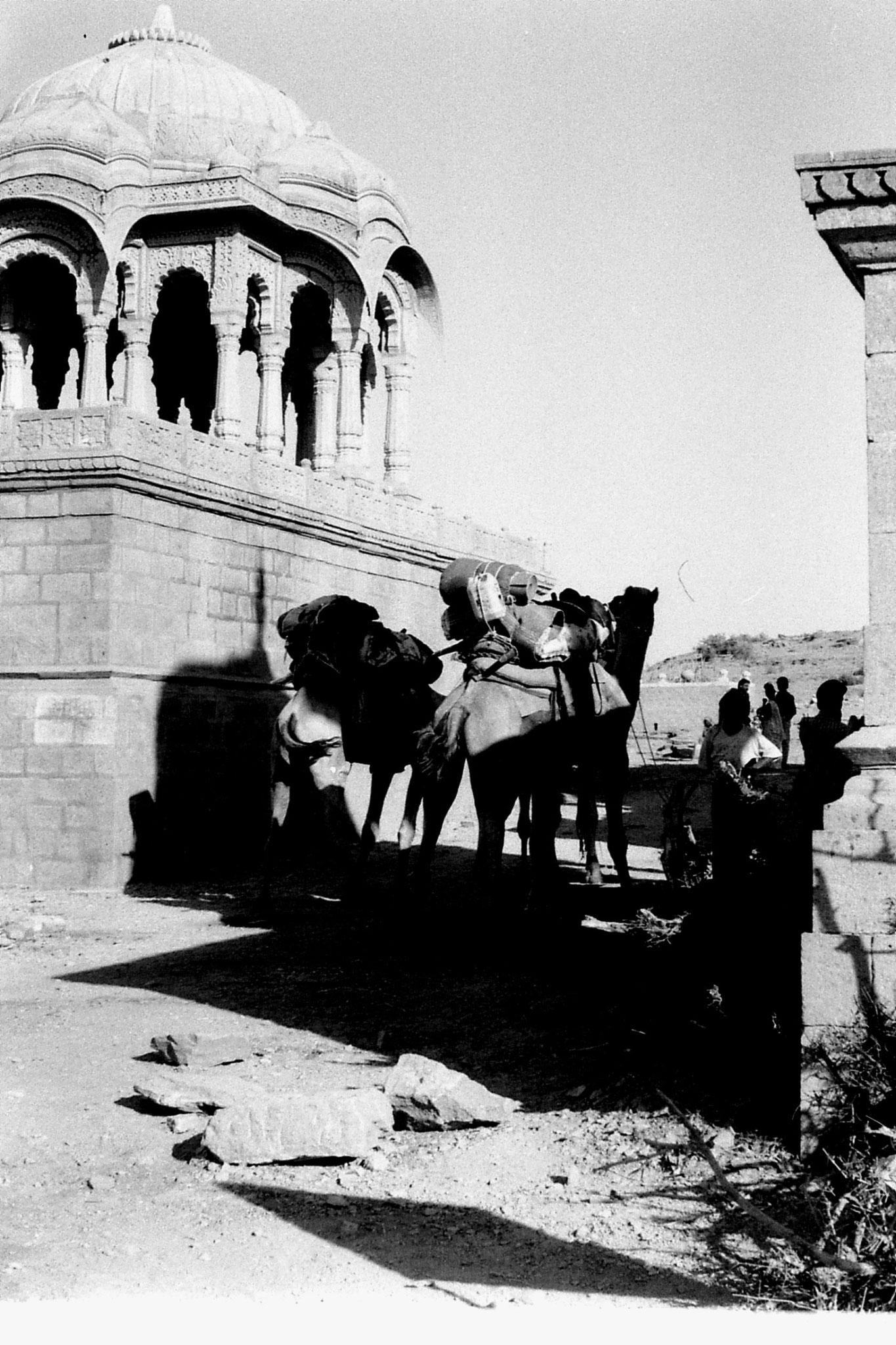 4/12/1989: 2: Jaisalmer camels at centaph