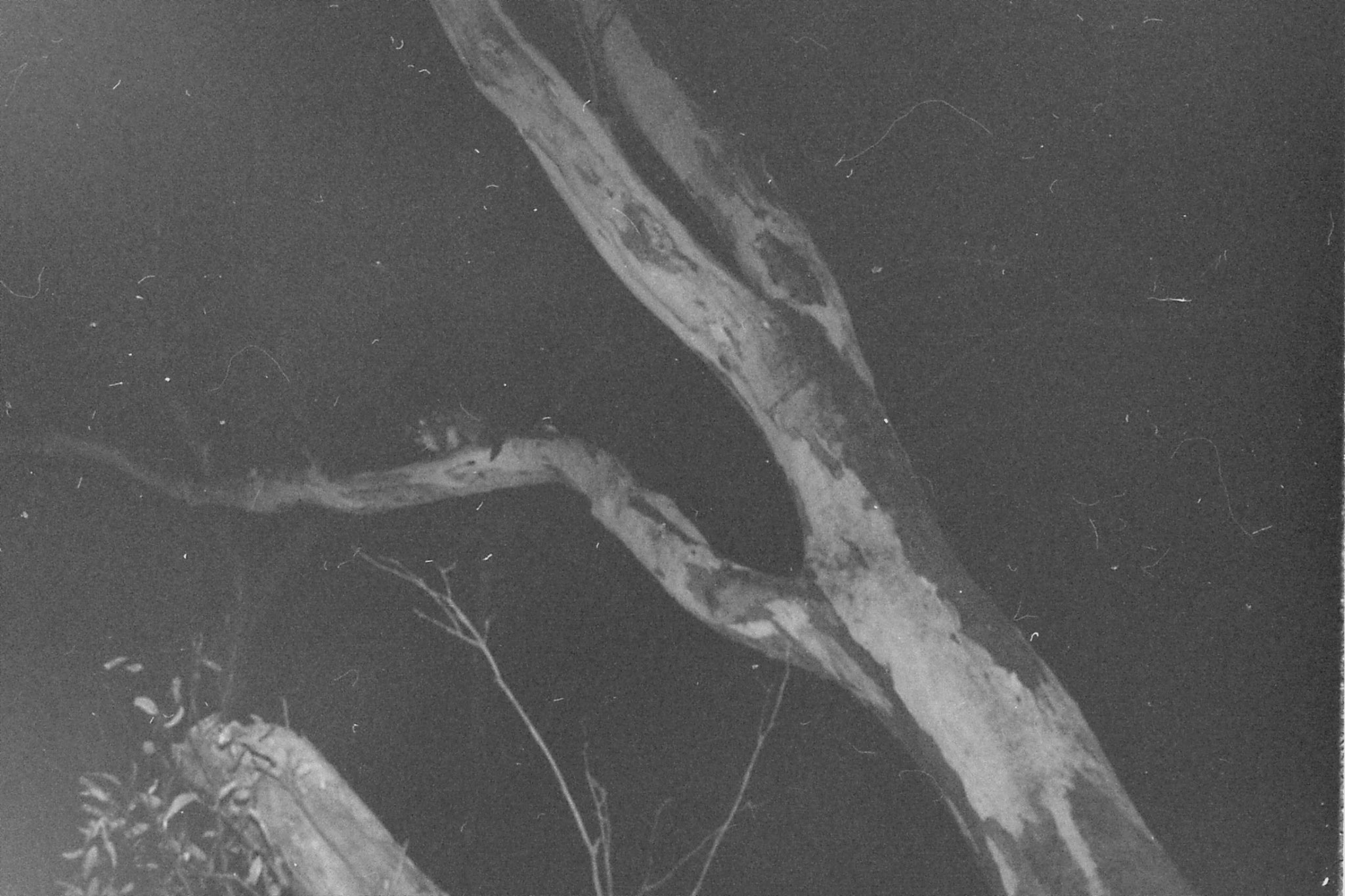 22/9/1990: 6: Dimboola Caravan Park possums