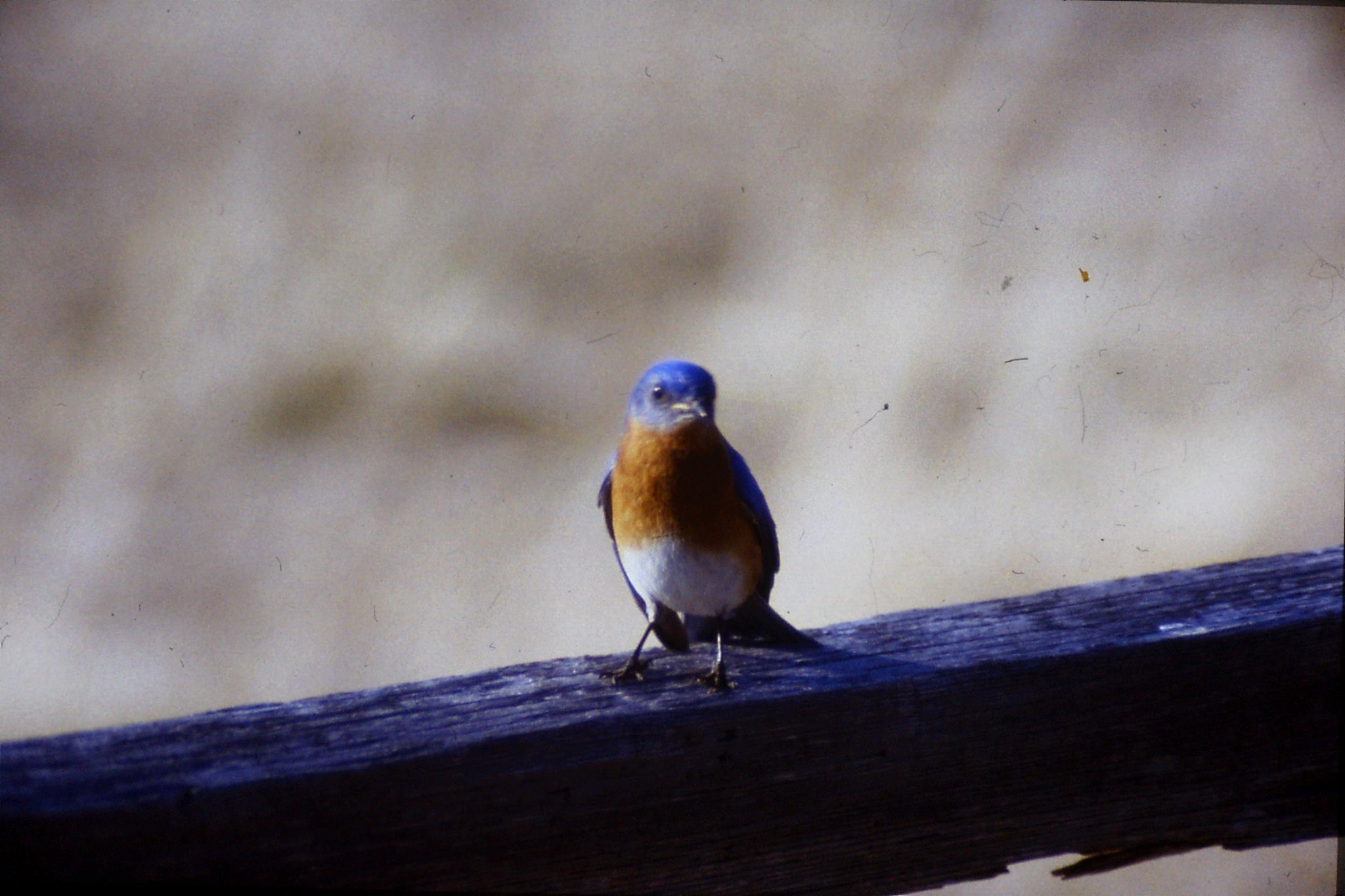 21/3/1991: 7: Blue Bird at Mary Potter's place