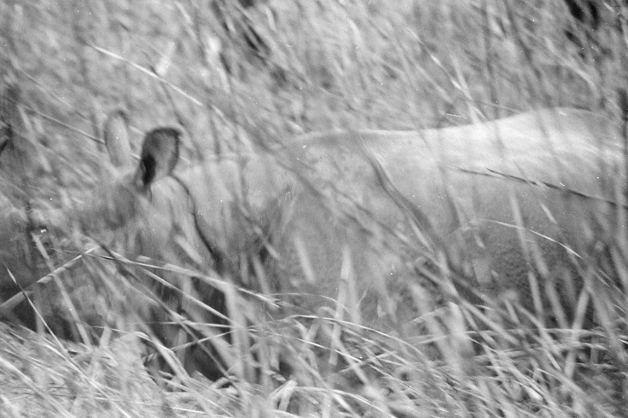 9/4/1990: 29: Kaziranga Indian One Horned Rhino