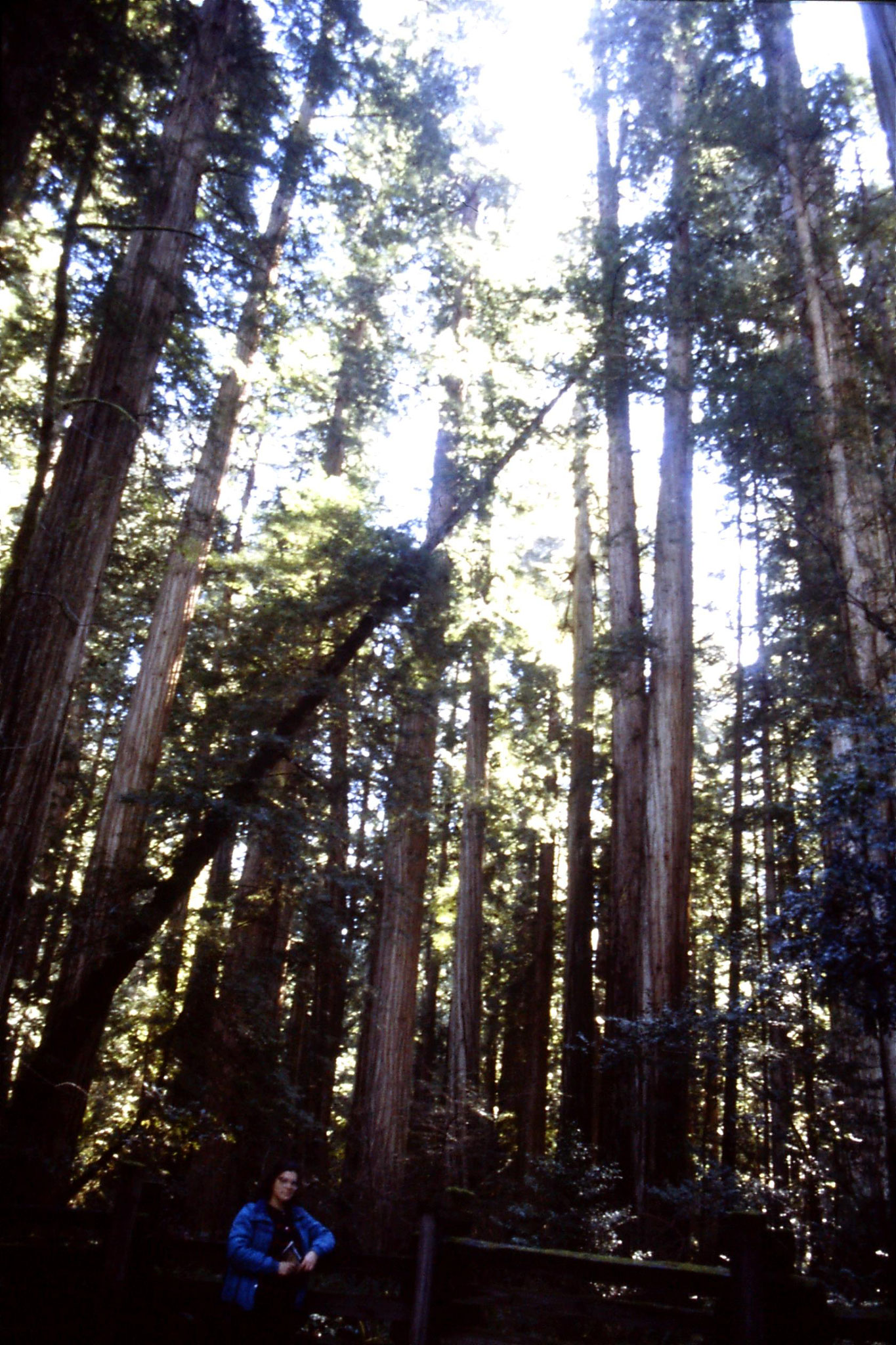 14/2/1991: 2: Jedediah Smith Redwood Park