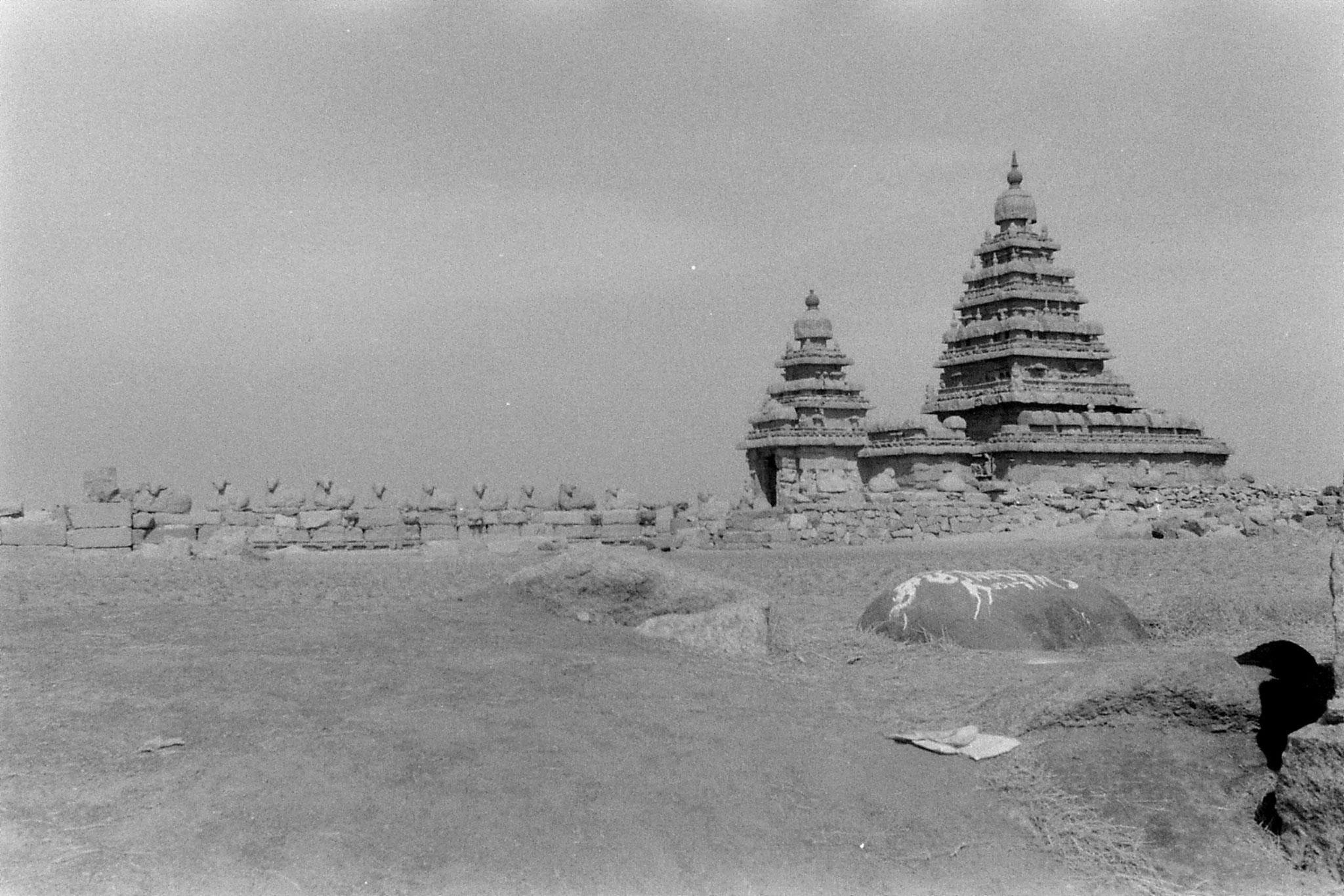 19/1/90: 25: Mahabalipuram - Shiva Temple - row of bulls