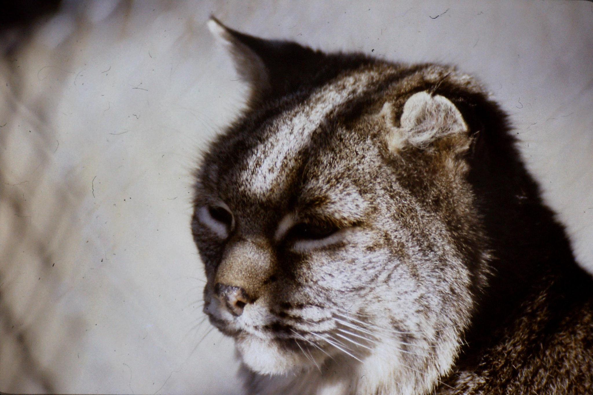 29/1/1991: 8: Boise Zoo