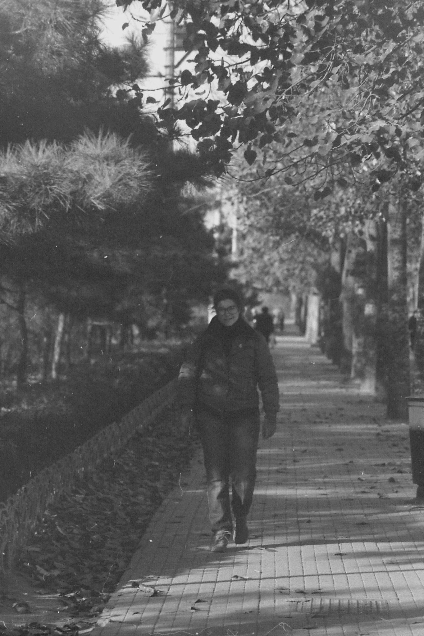 22/11/1988: 22: along road to zoo and Purple Bamboo Shoots Park