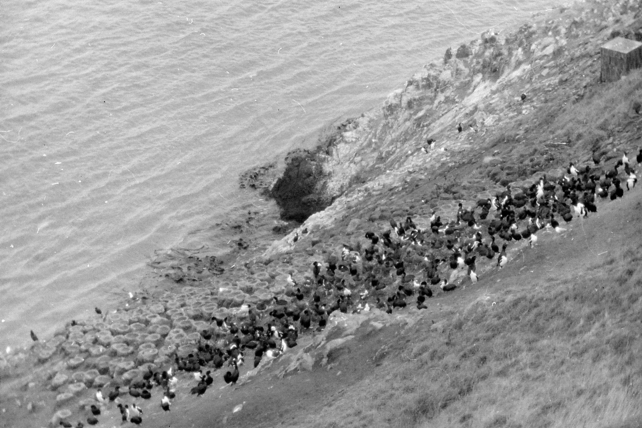 19/8/1990: 23: Dunedin