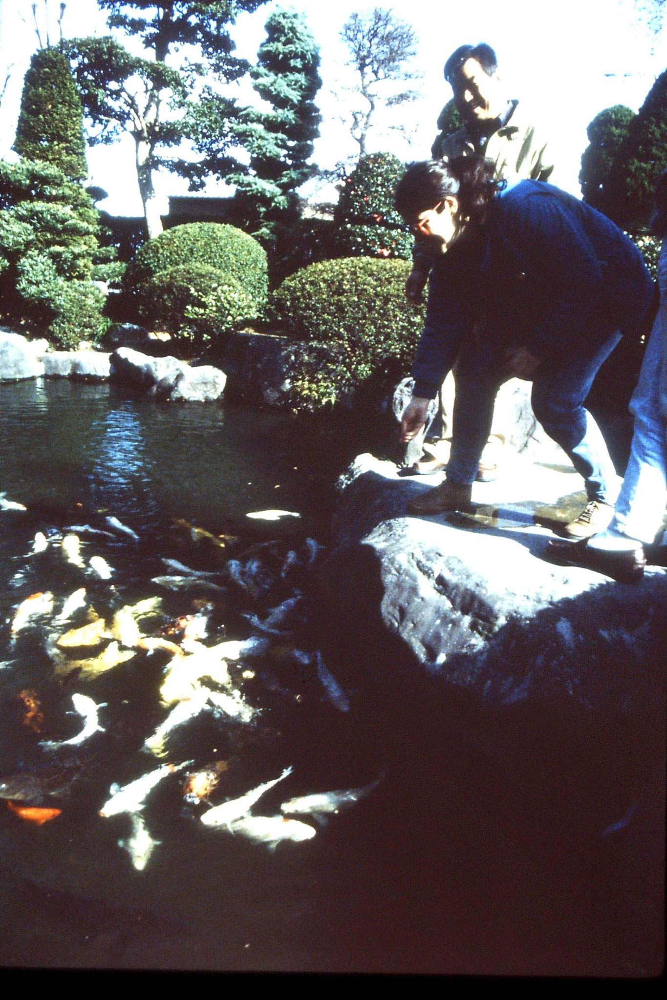27/1/1989: 16: E feeding carp