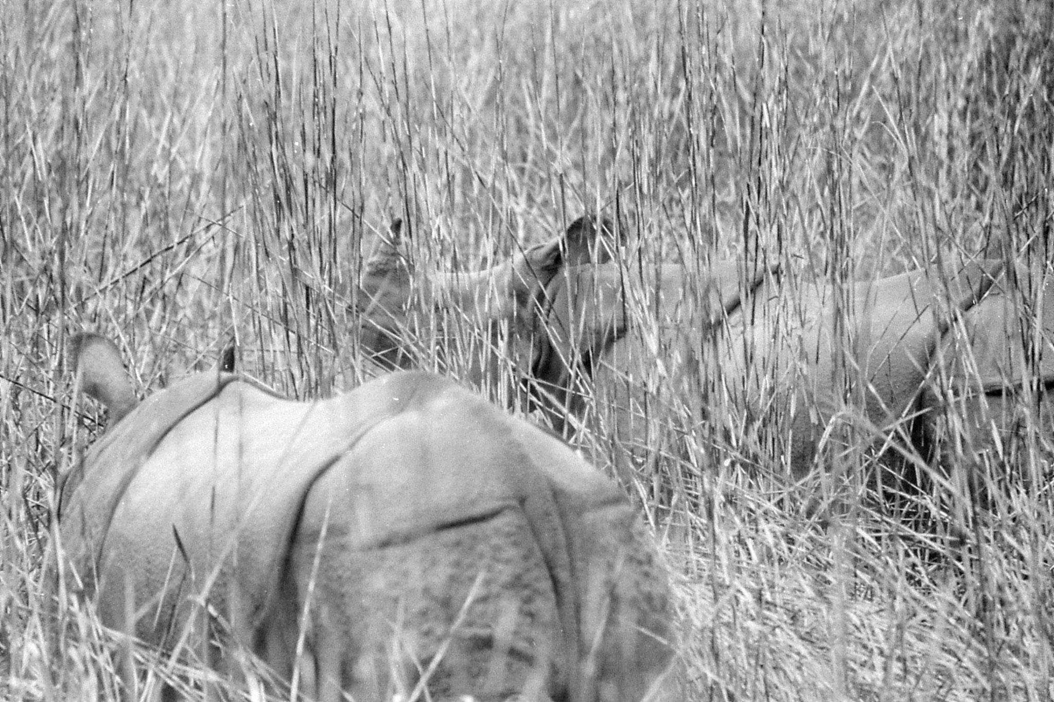9/4/1990: 25: Kaziranga Indian One Horned Rhino
