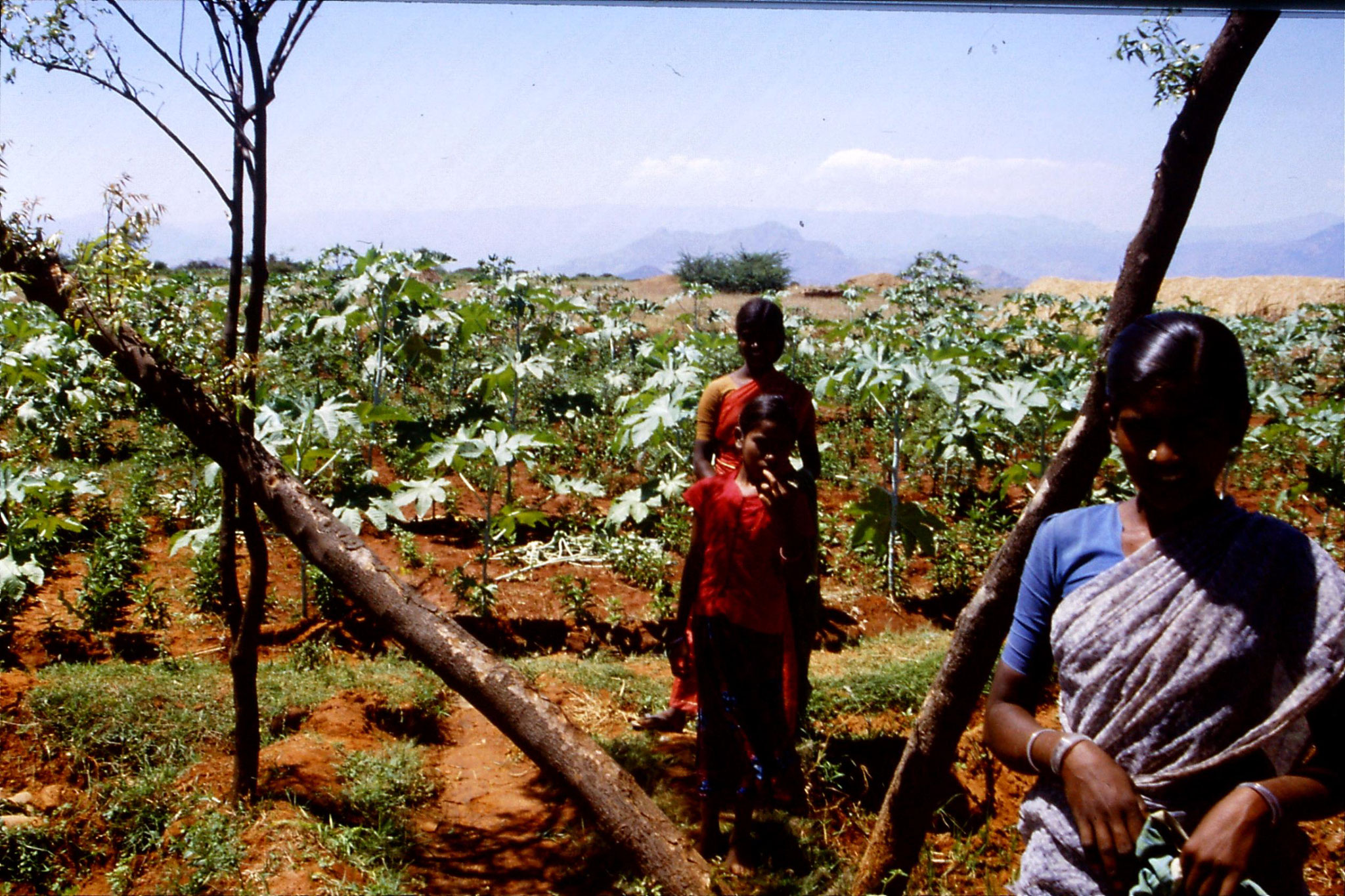 104/28: 21/2/1990 Batlagundi afforestation project