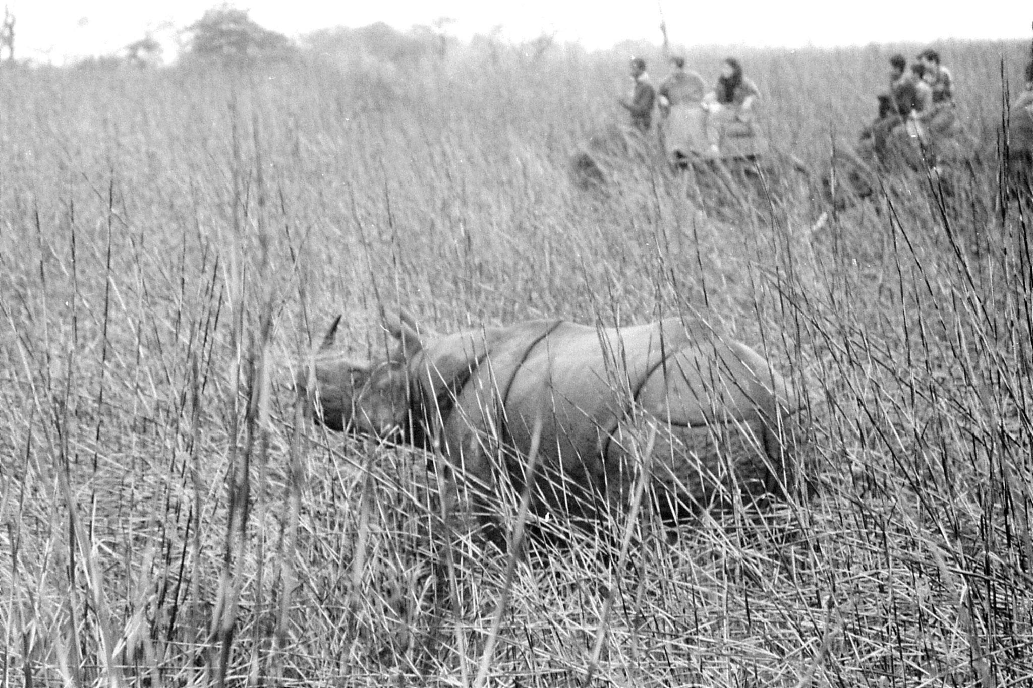 9/4/1990: 28: Kaziranga Indian One Horned Rhino