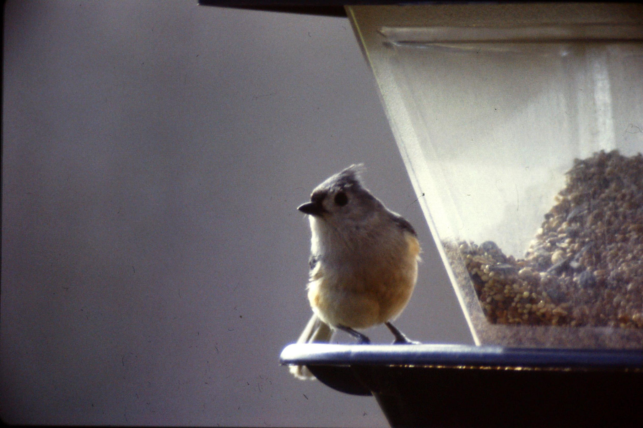 17/3/1991: 24: Benge Gap, chickadee
