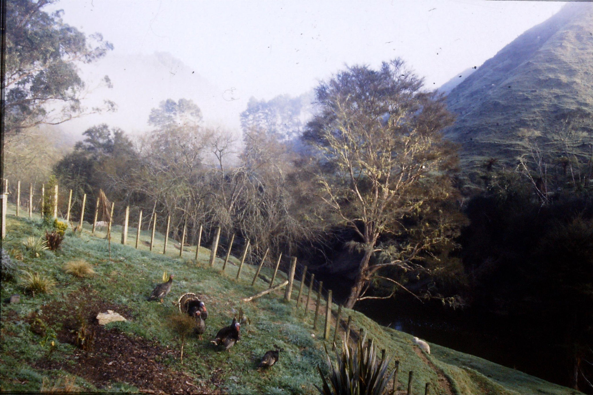 29/8/1990: 25: Tangarakau, pictures around farm