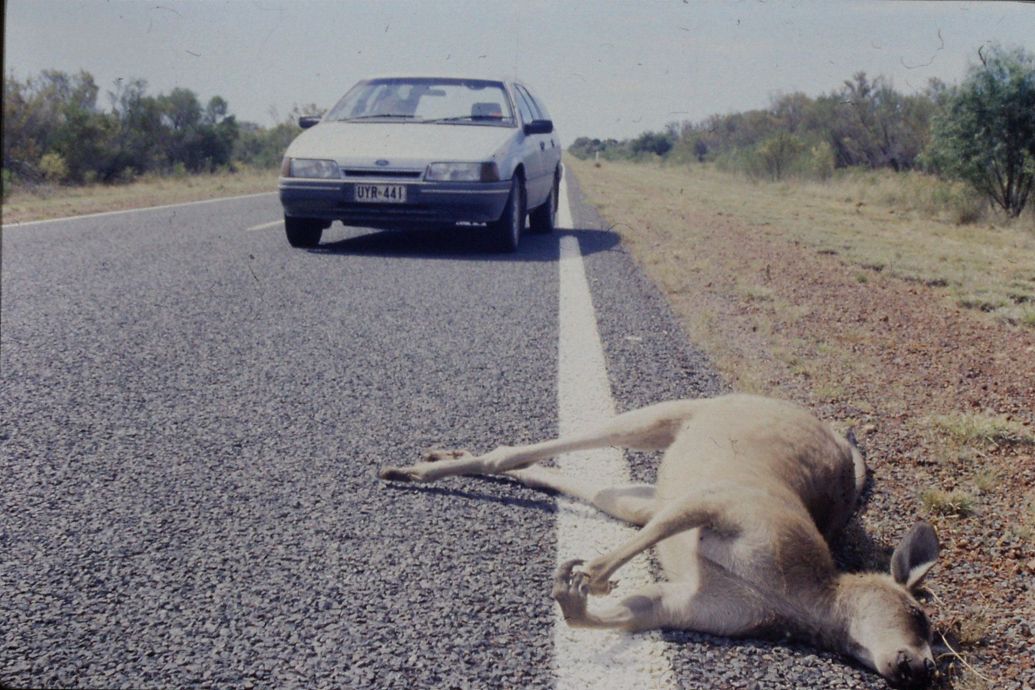 2/11/1990: 36: dead kangaroo on road