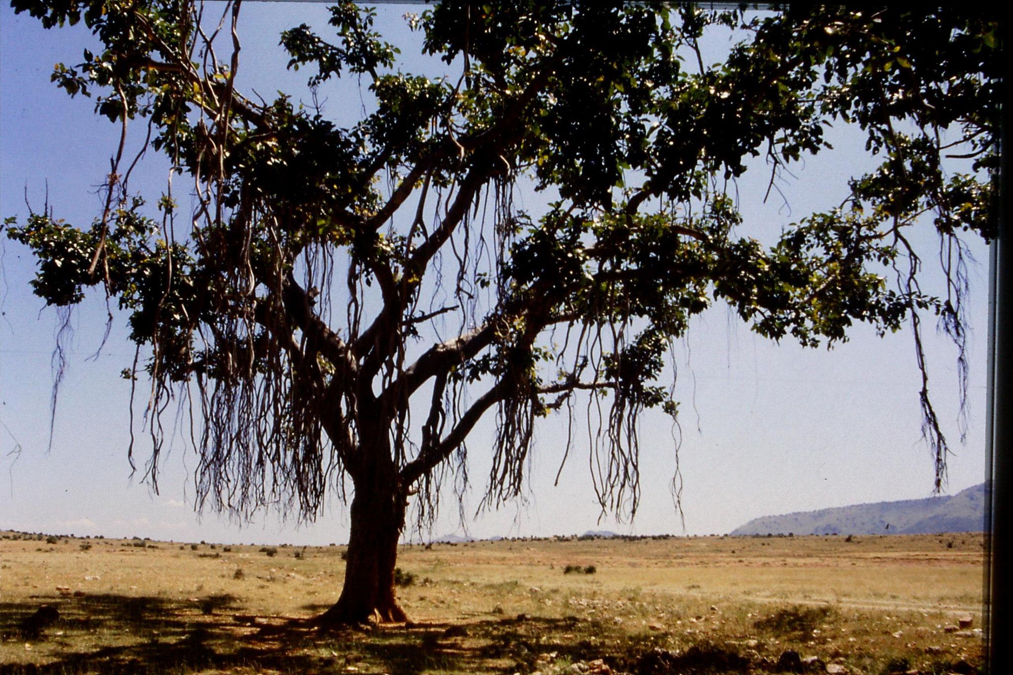 104/26: 21/2/1990 Batlagundi afforestation project