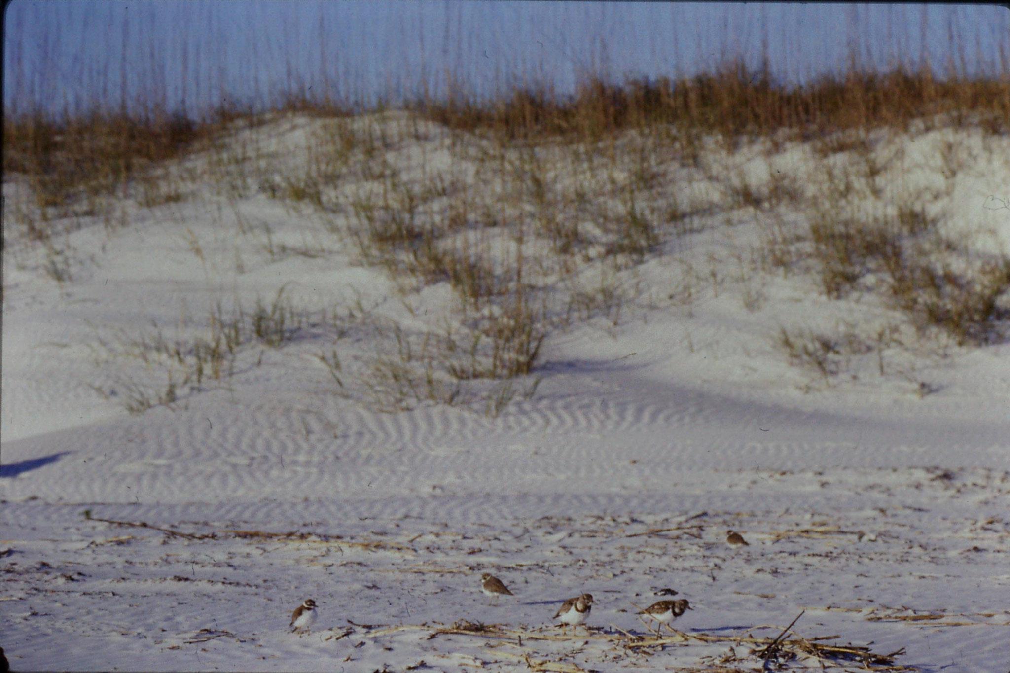 12/3/1991: 13: St Augustine Beach