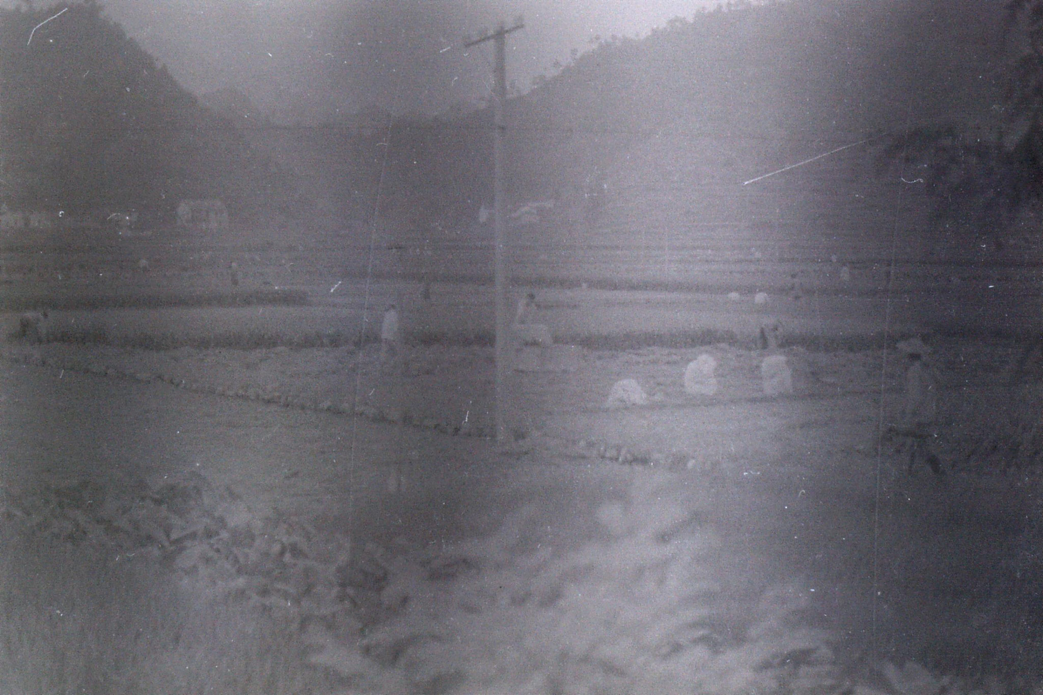 2/8/1989: 4: rice harvesting from train to Huang Shan