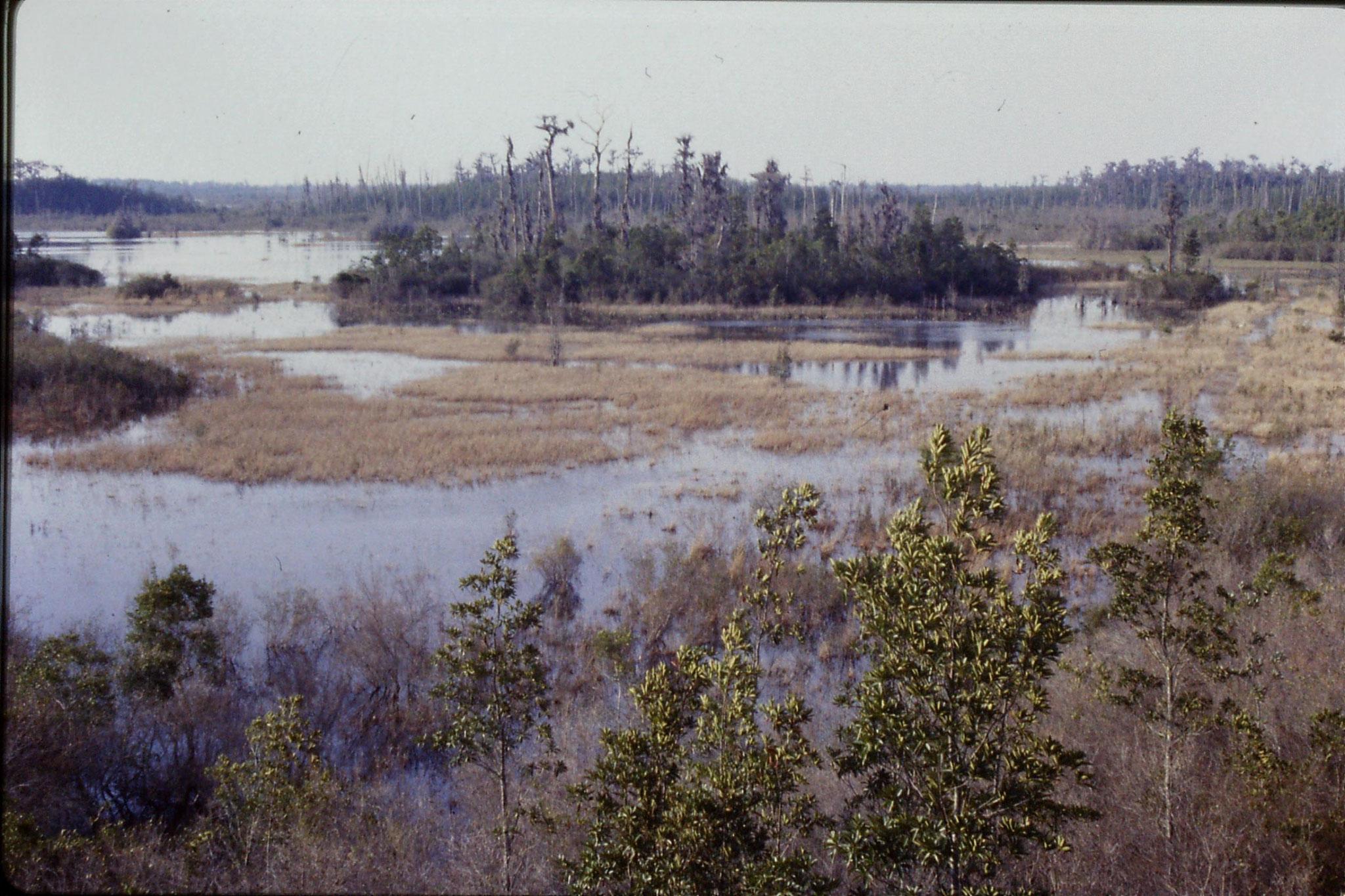 13/3/1991: 16:  Okefenokee Swamp
