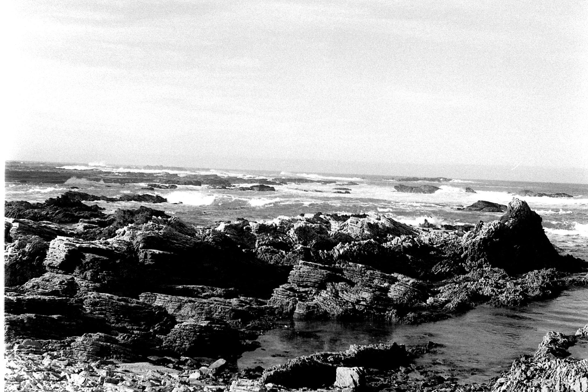 9/8/1990: 22:Kaikoura: seals
