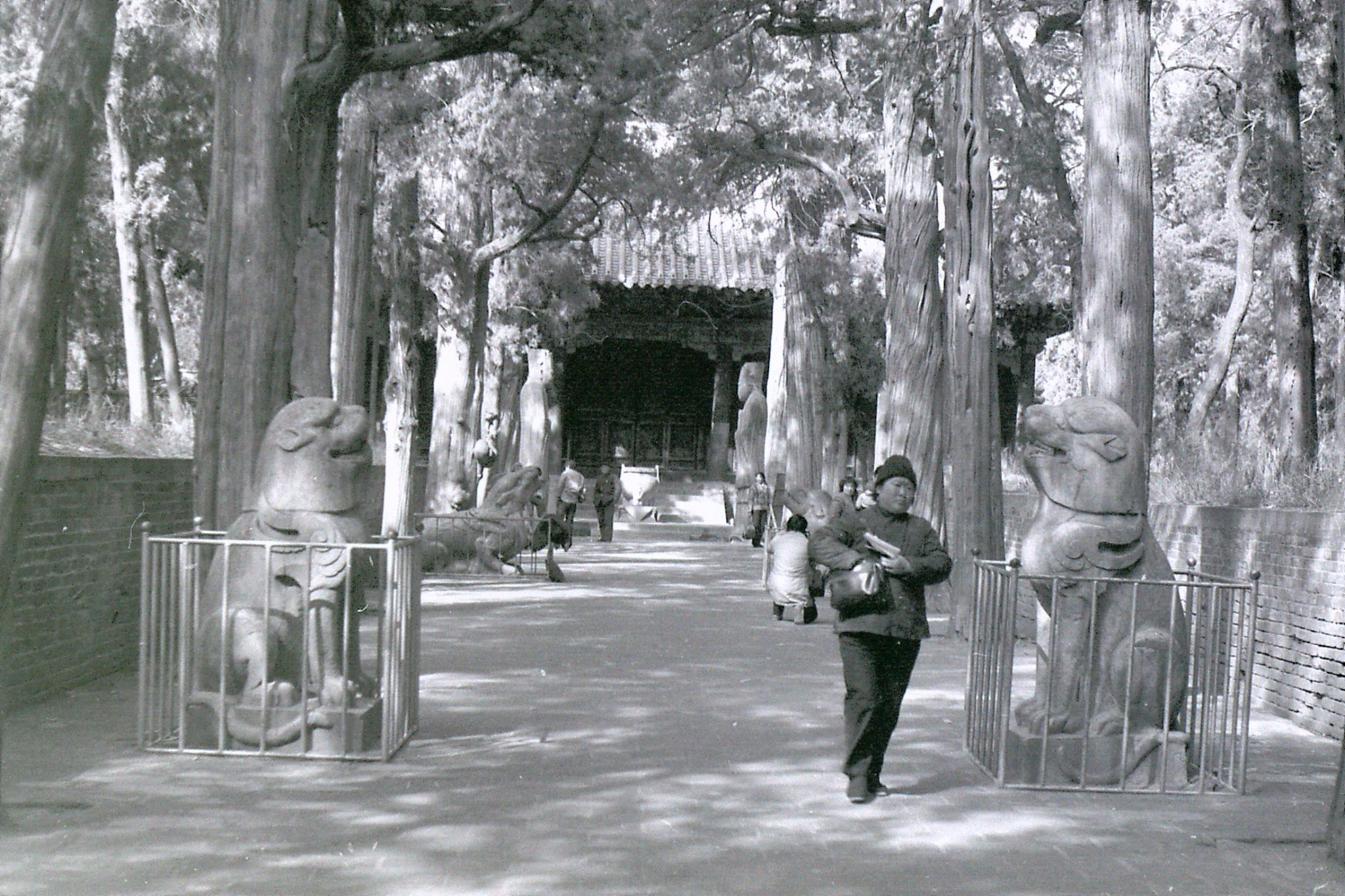 21/2/1989: 27: Qufu avenue leading to Confucian tomb
