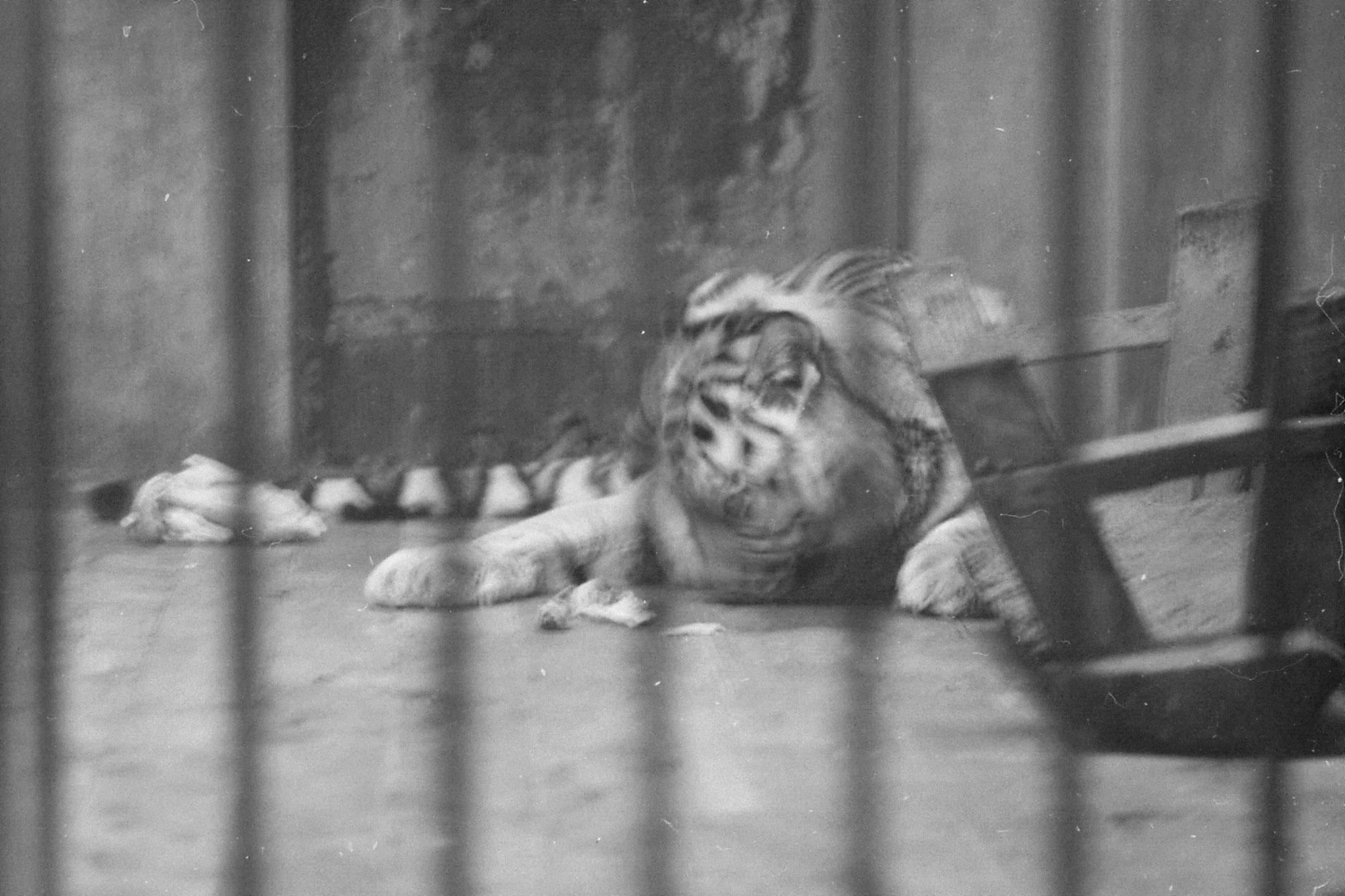 19/11/1988: 12: Beijing Zoo