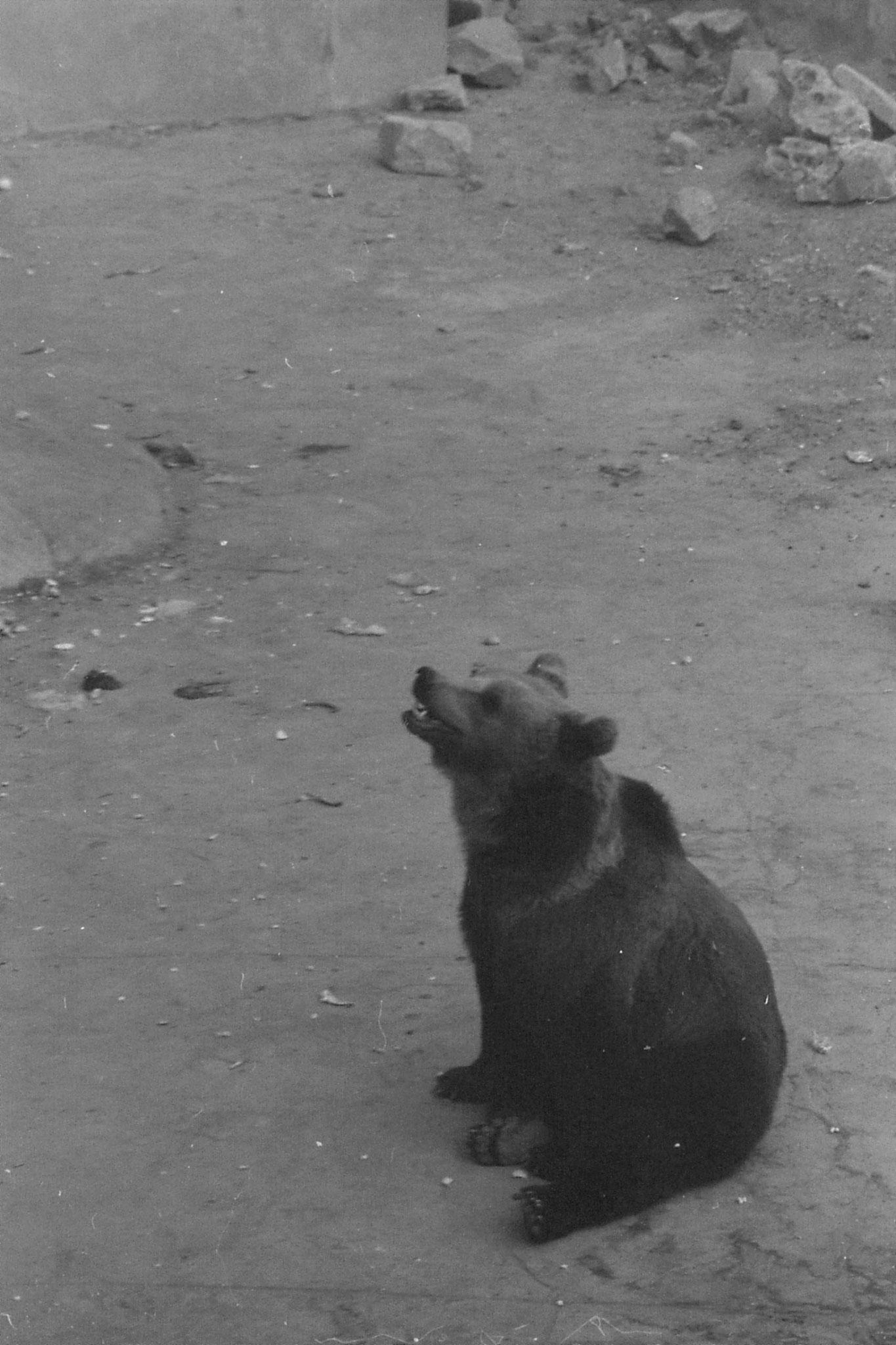 19/11/1988: 9: Beijing Zoo