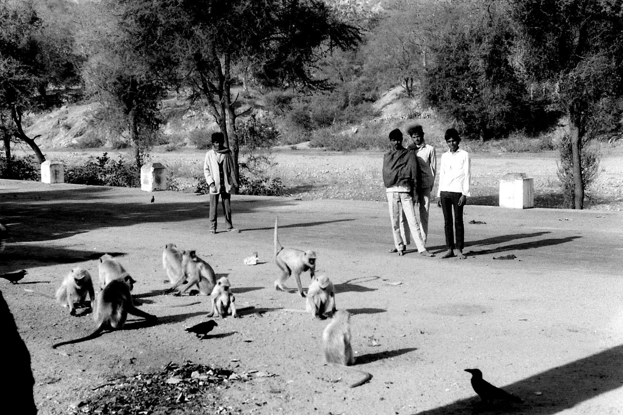 7/12/1989: 11: monkeys at bus stop
