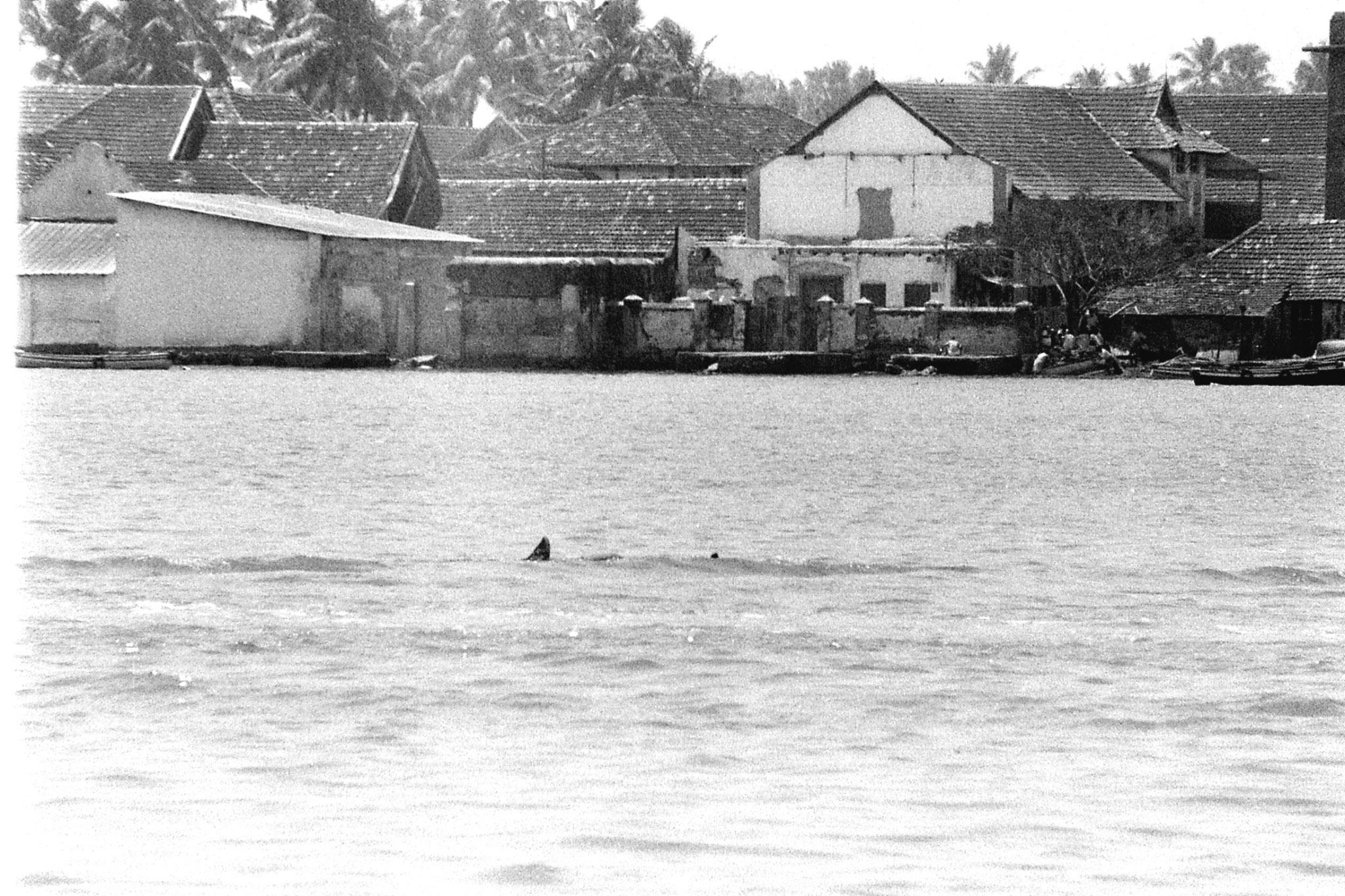25/2/90: 1: Cochin dolphins and views of Fort Cochin