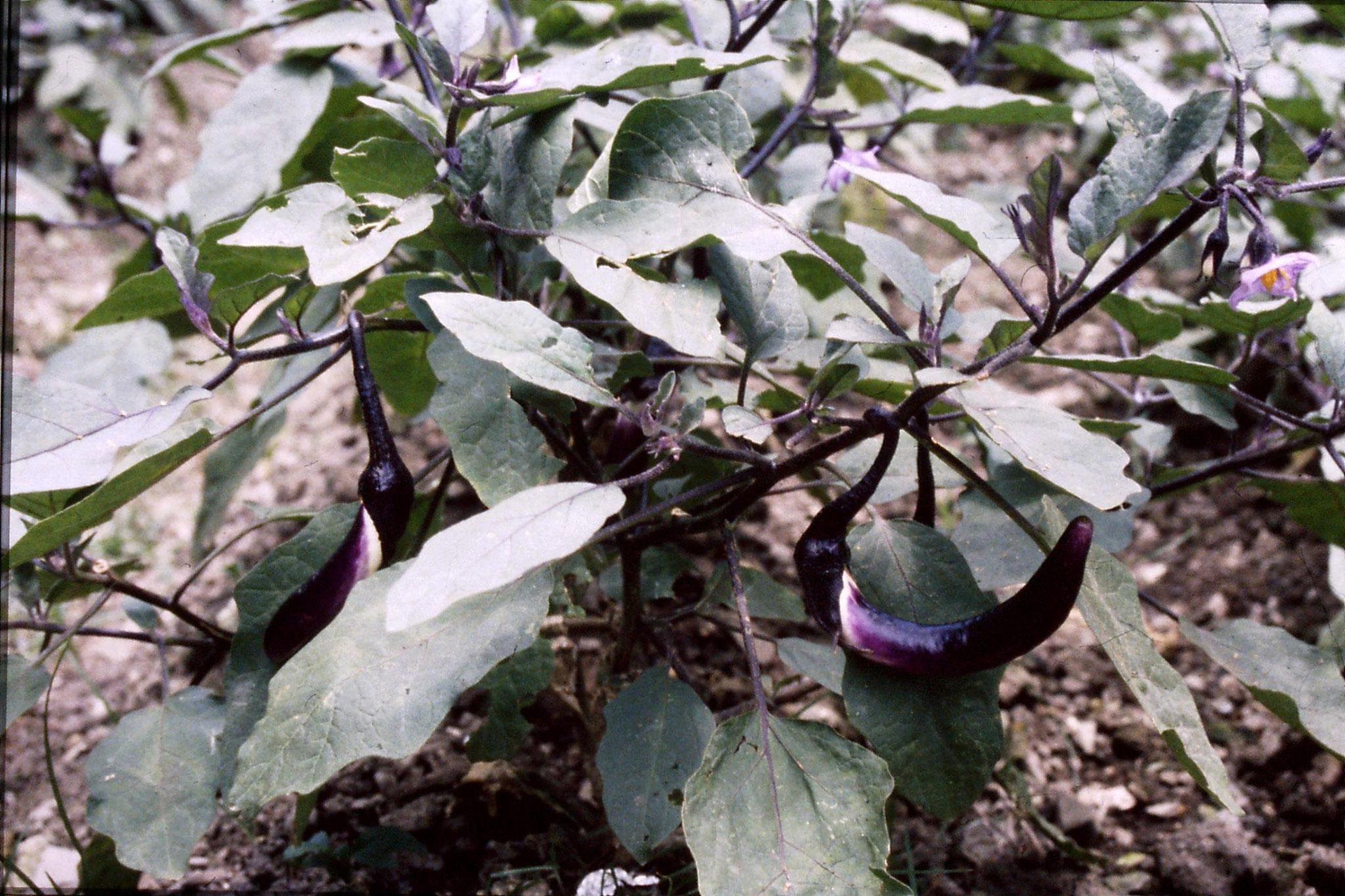 26/6/1989: 18: Shaoxing, garden of Lu Xun