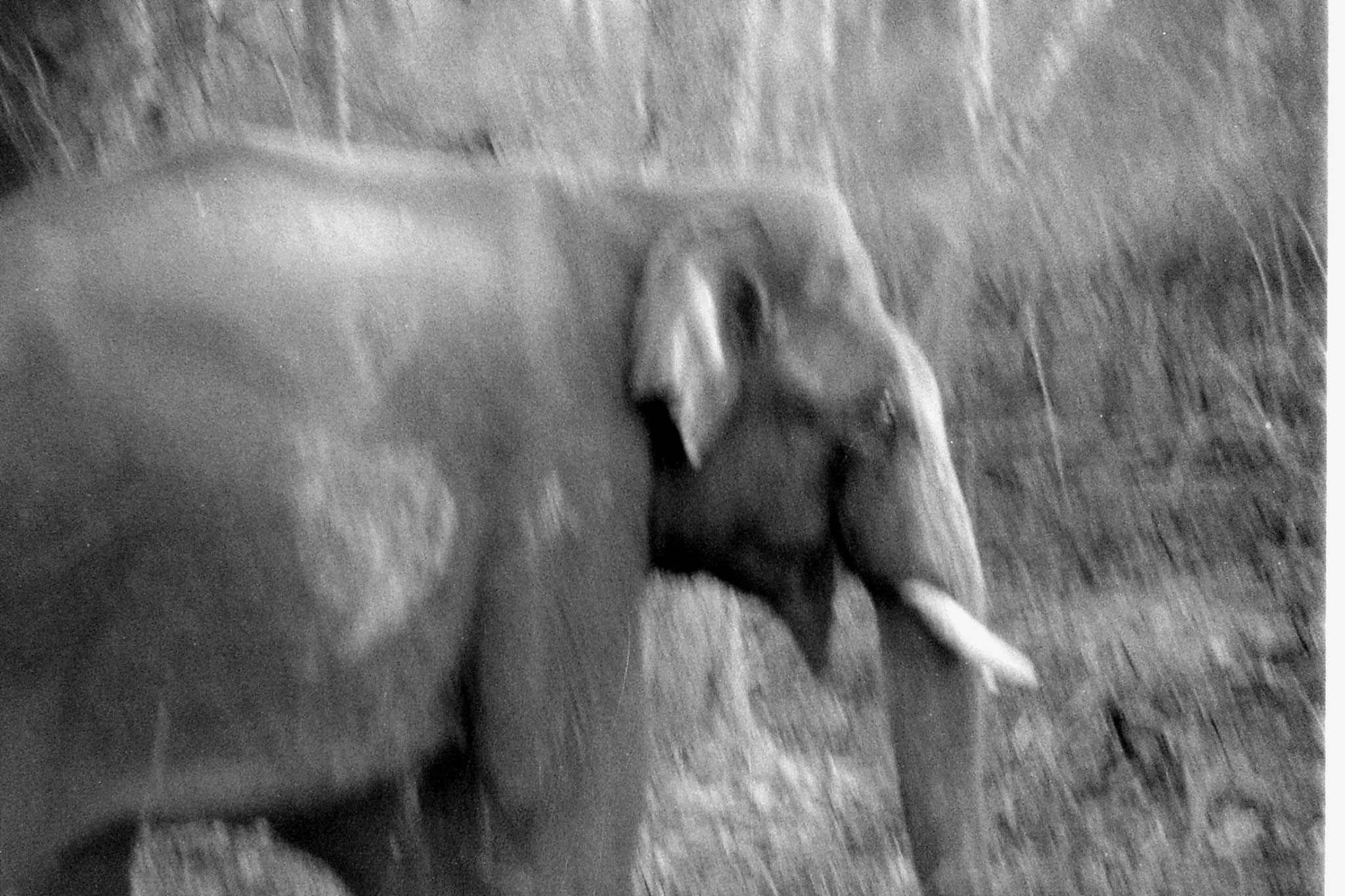 27/2/90: 11: Bandipur elephant