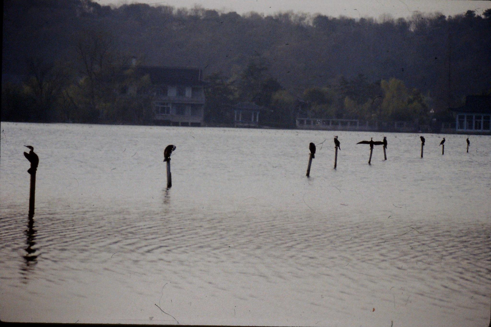 26/3/1989: 25: Xili Lake