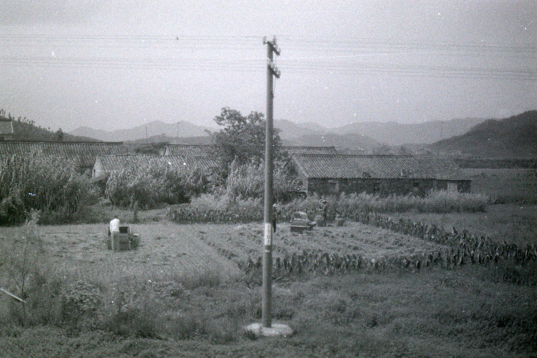 23/7/1989: 23: fields from train to Ningbo