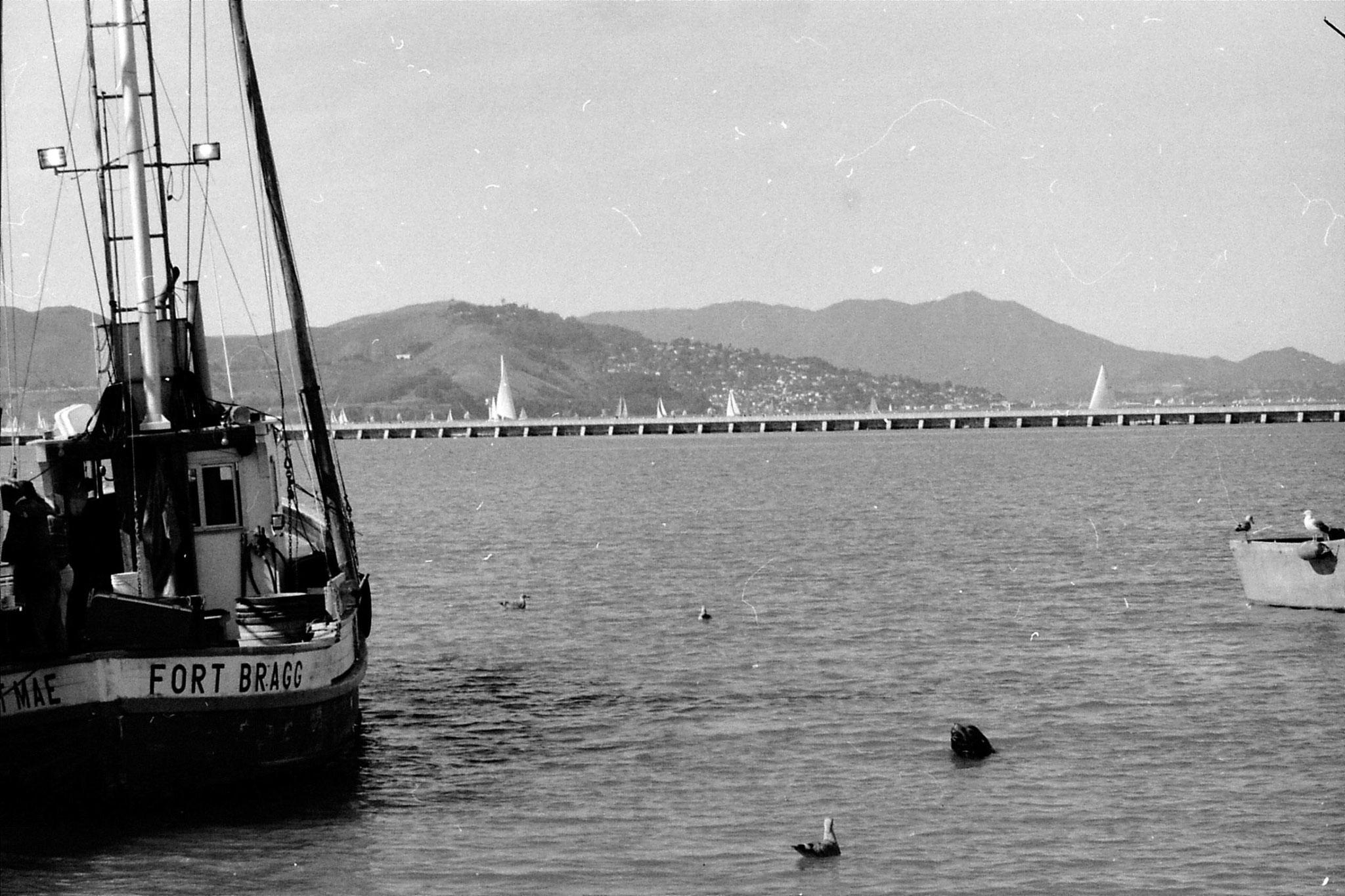17/2/1991: 29: San Francisco