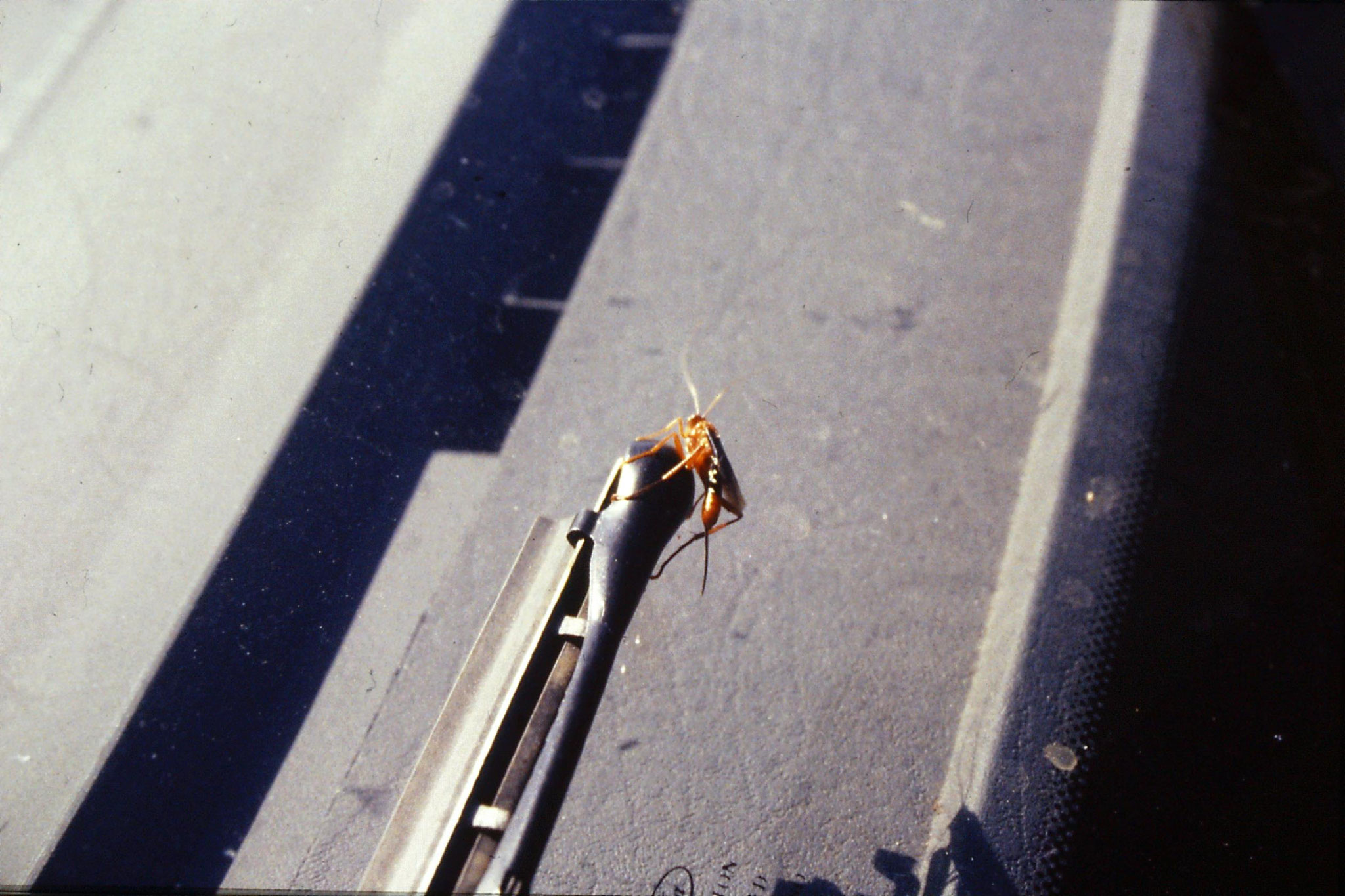 20/9/1990: 36:insect on windscreen