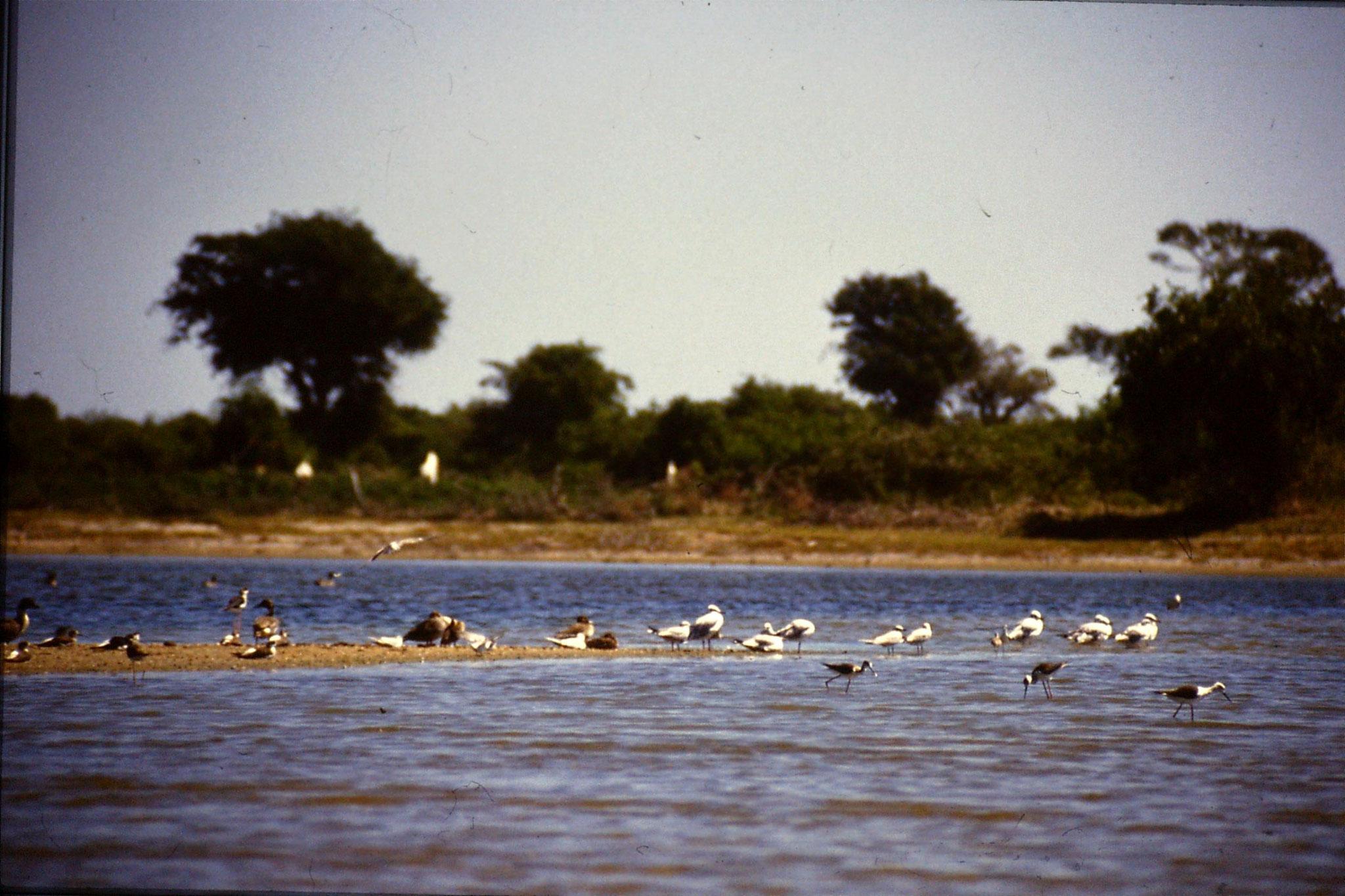 26/1/1990: 37: Kirinda lagoon