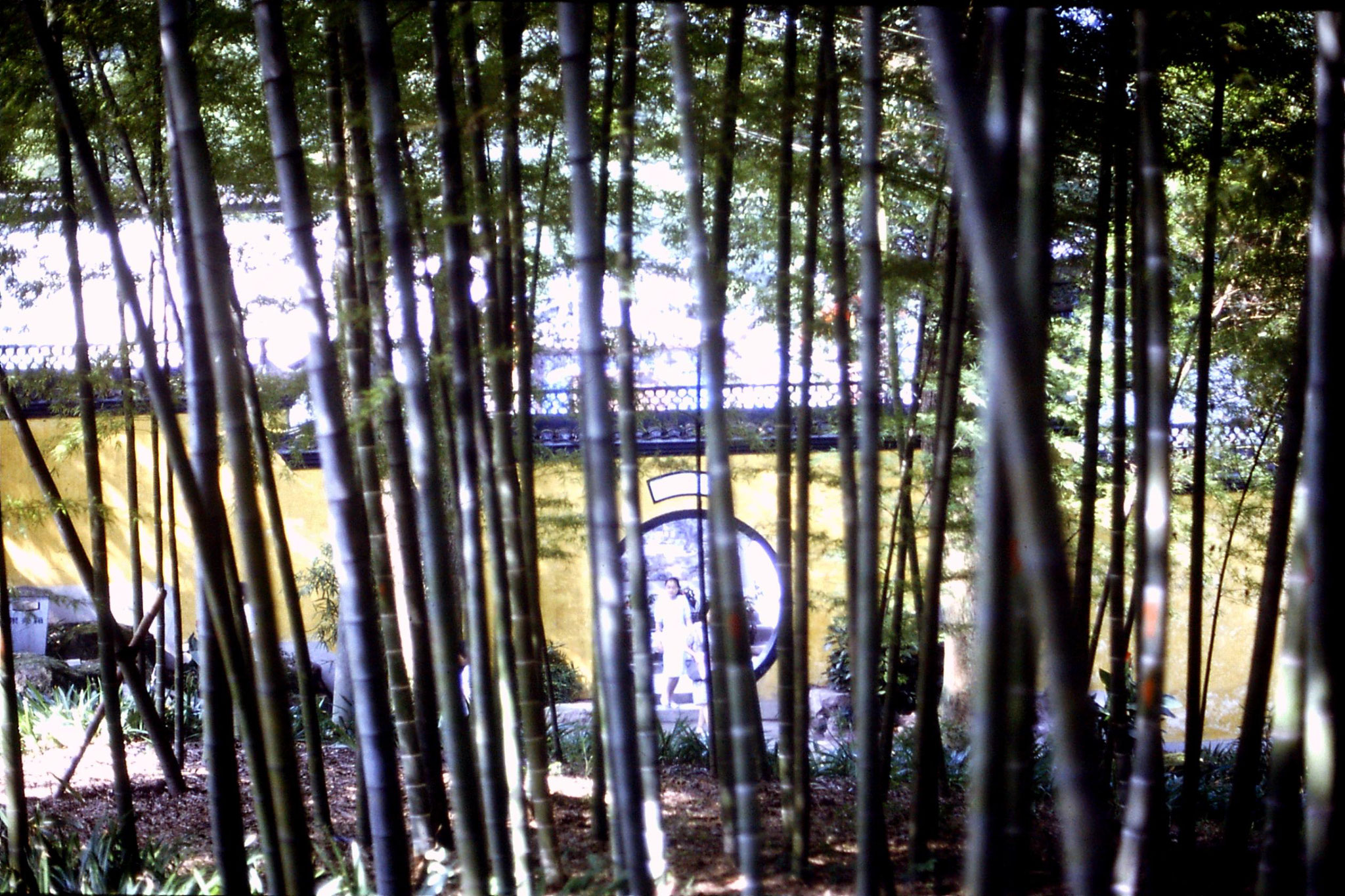 15/7/1989: 24: Yellow Dragon Well  bamboo and 'Old Town'