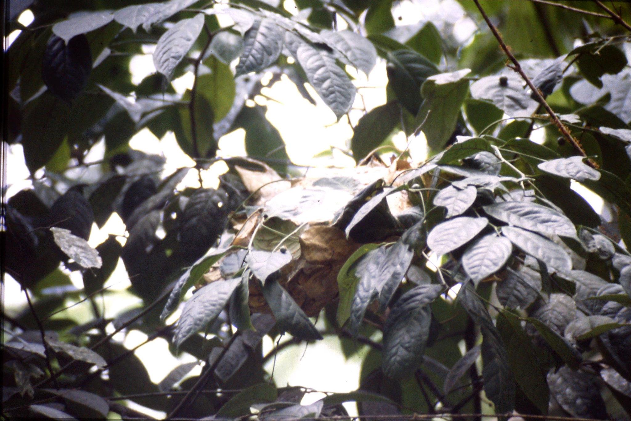 12/6/1990: 20: Trek - ant nest