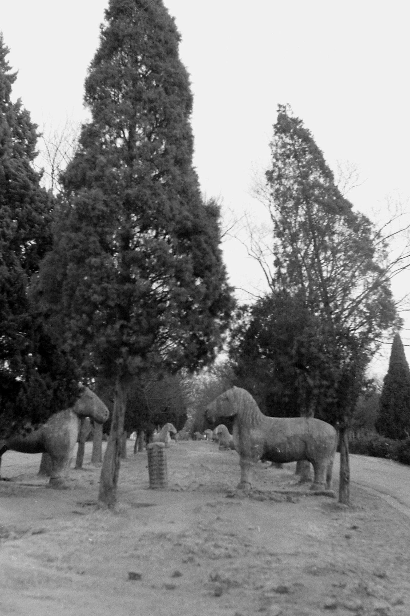 12/12/1988: 28: Nanjing, Linggu Park