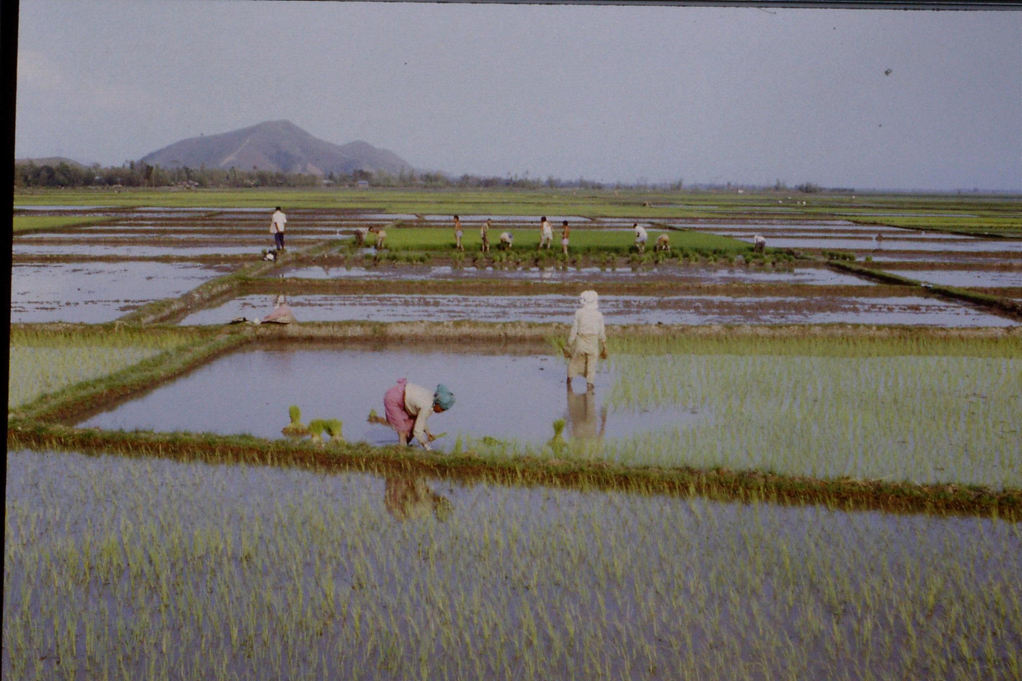113/21: 17/4 Rice Planting