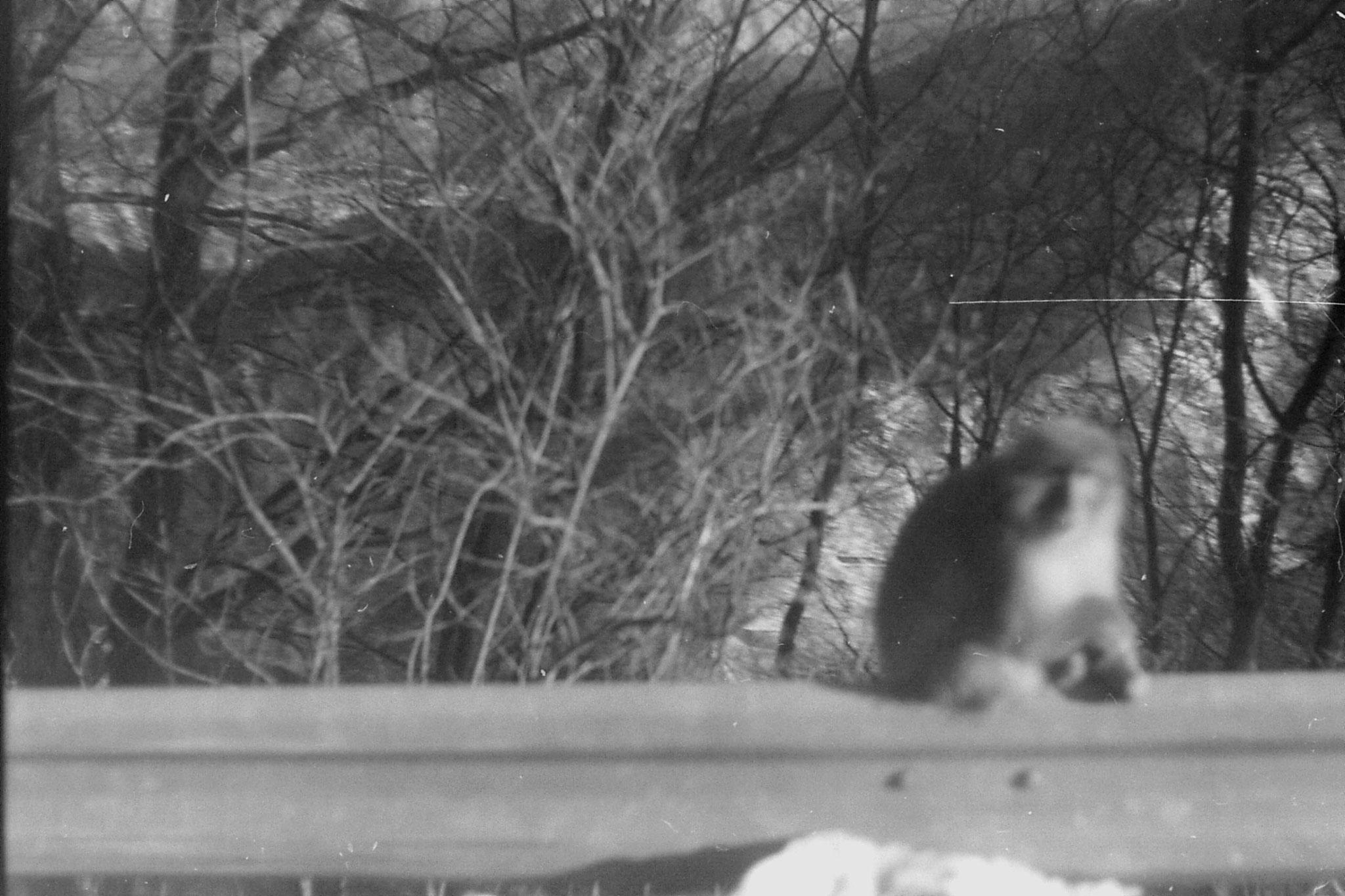 30/1/1989: 36:monkey