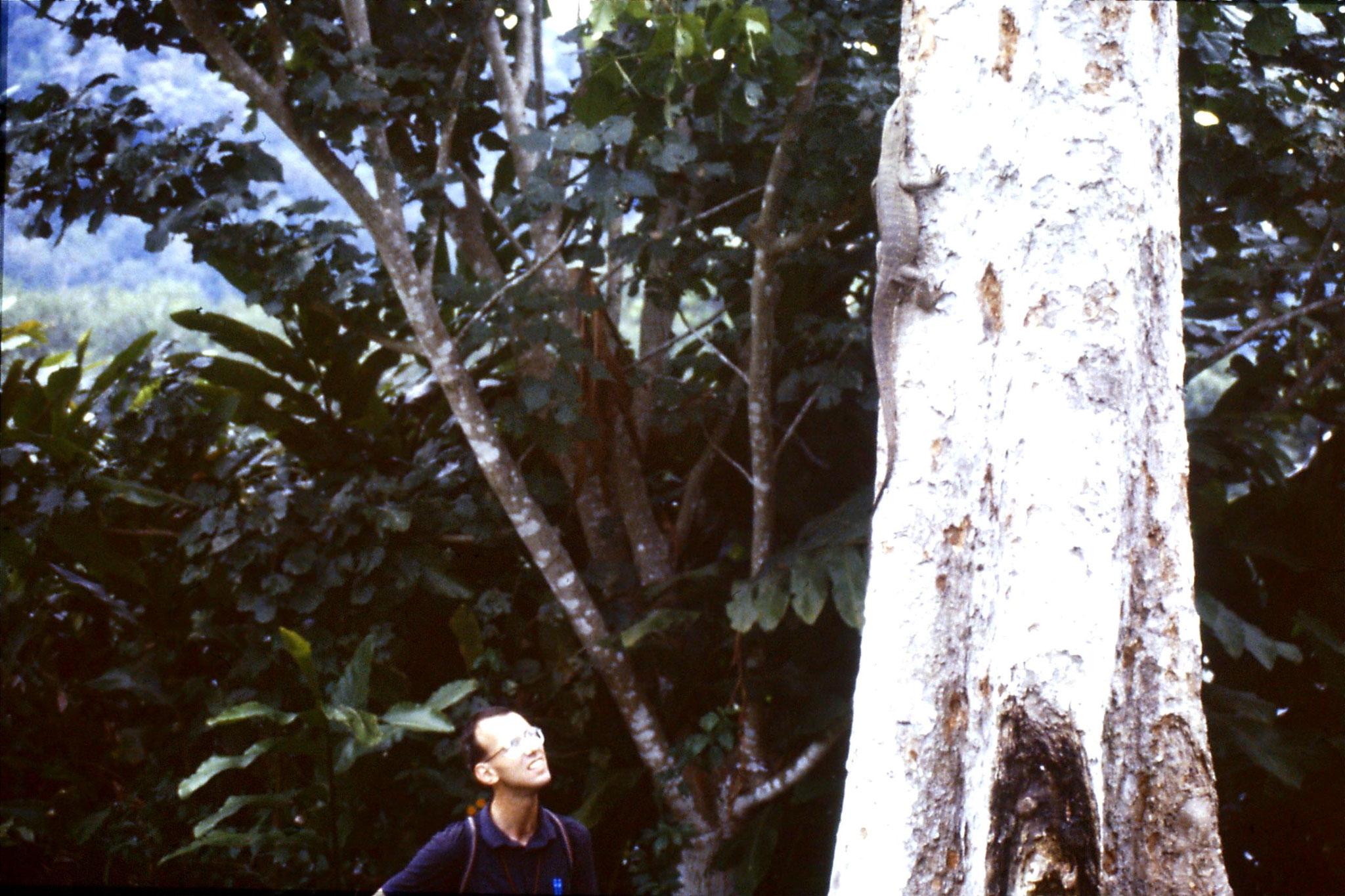 22/6/1990: 31: Tamen Negara monitor lizard