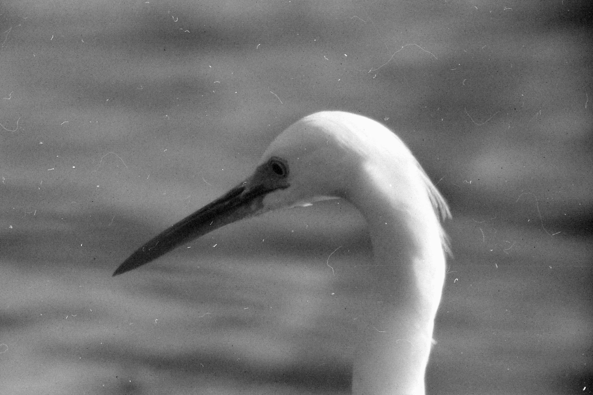 21/12/1990: 14: Everglades